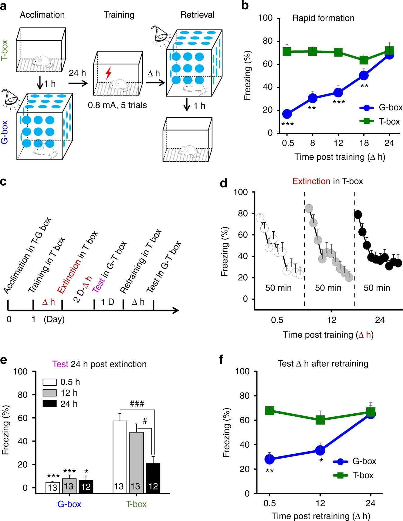 The interhemispheric CA1 circuit governs rapid generalisation but not fear  memory | Nature Communications