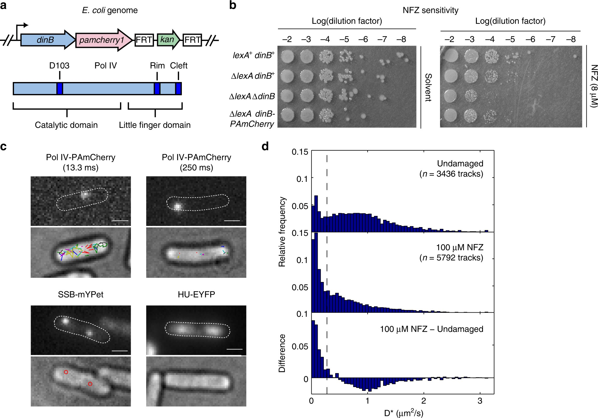 Single-molecule imaging reveals multiple pathways for the