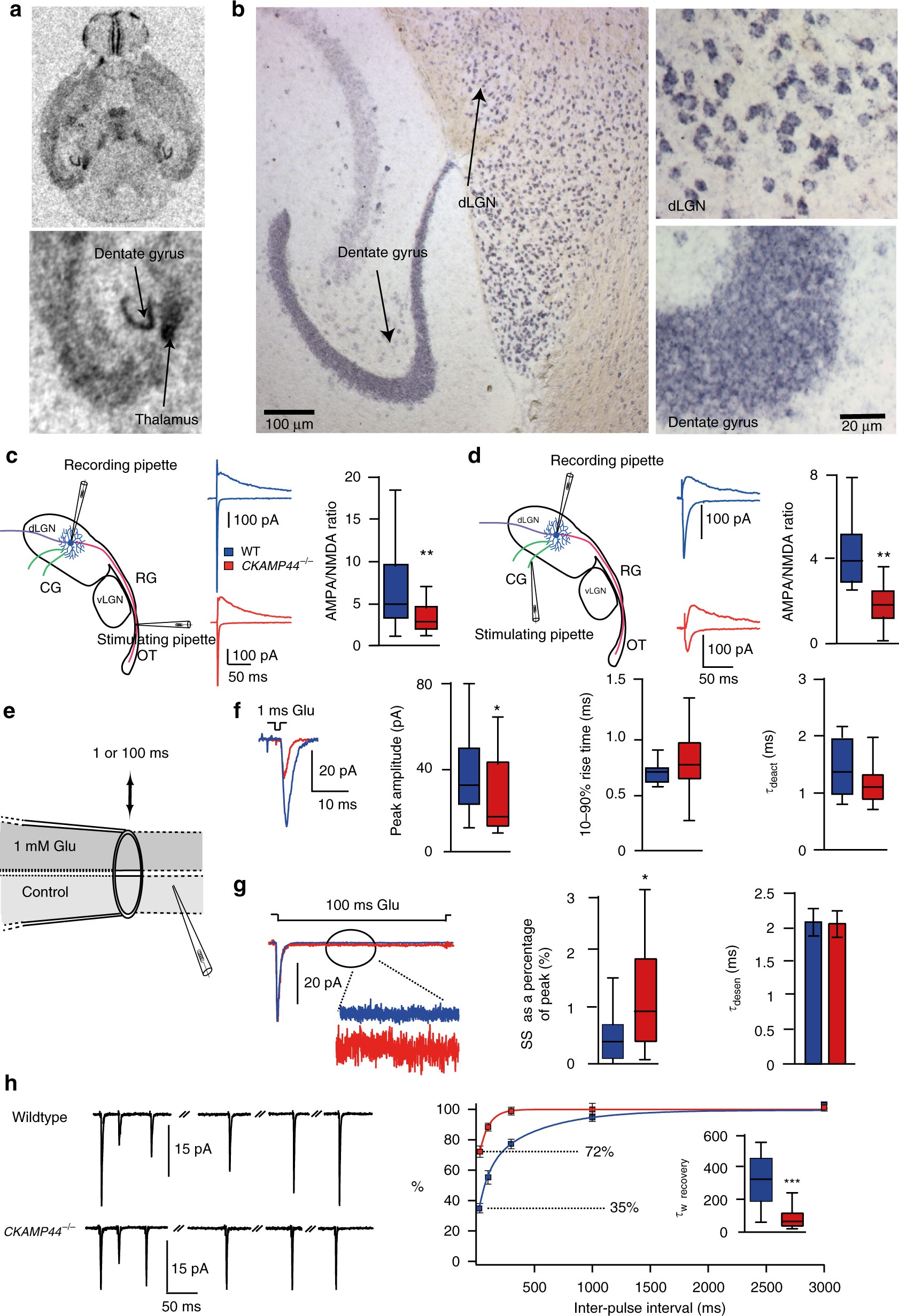 Ckamp44 Modulates Integration Of Visual Inputs In The Lateral Dark Light Activated Relay Geniculate Nucleus Nature Communications