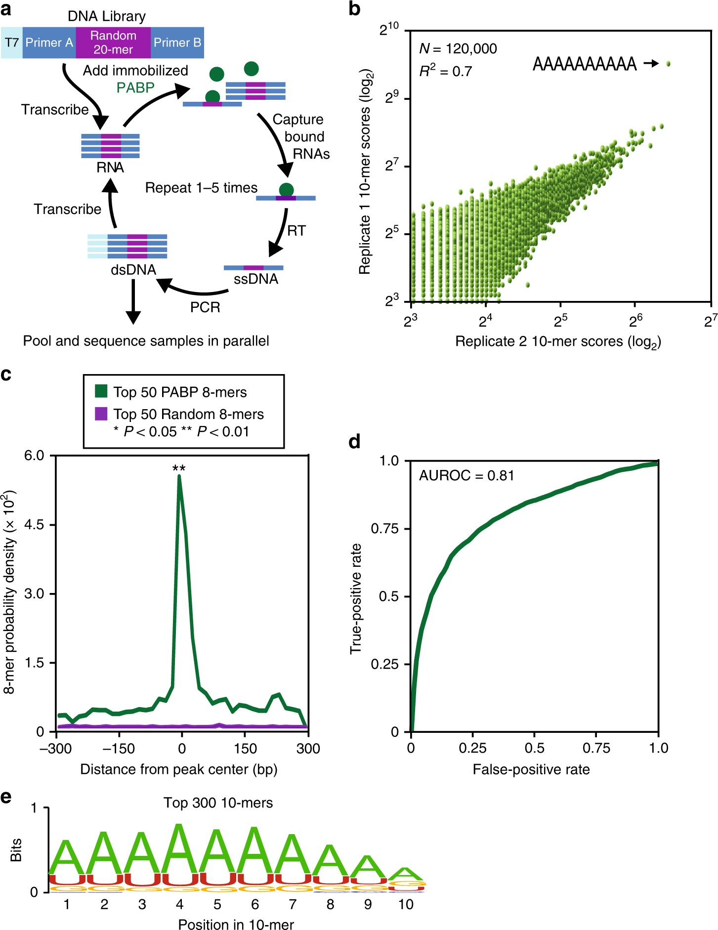 Inhibition of Poly(A)-binding protein with a synthetic RNA ... on