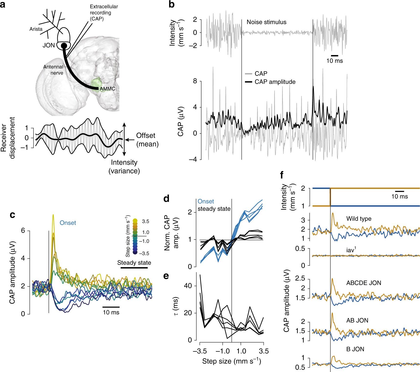 Fast Intensity Adaptation Enhances The Encoding Of Sound In Astatic Jt 30 Wiring Diagram Drosophila Nature Communications