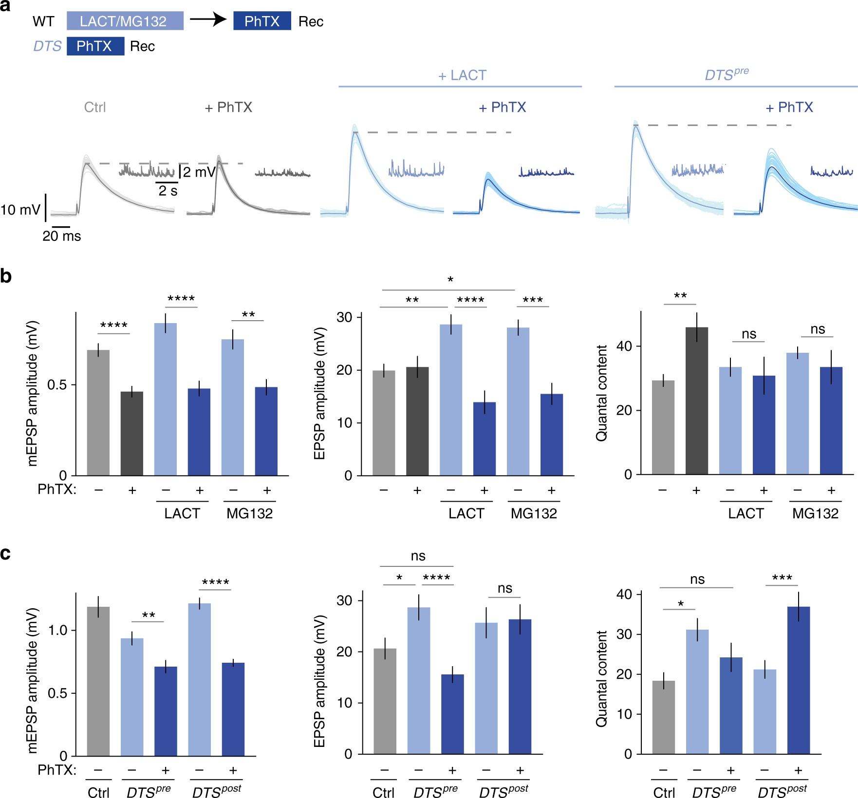 Dysbindin Links Presynaptic Proteasome Function To Homeostatic Recruitment Of Low Release Probability Vesicles