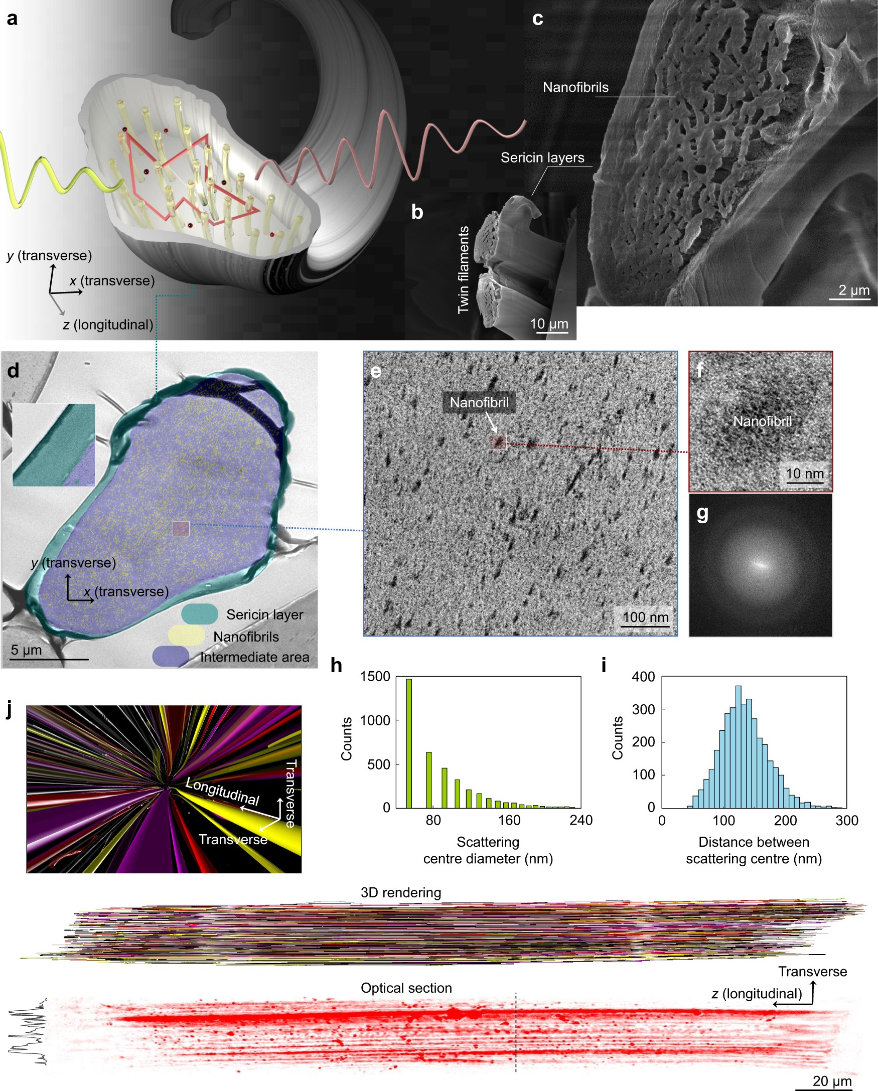 Anderson light localization in biological nanostructures of ...