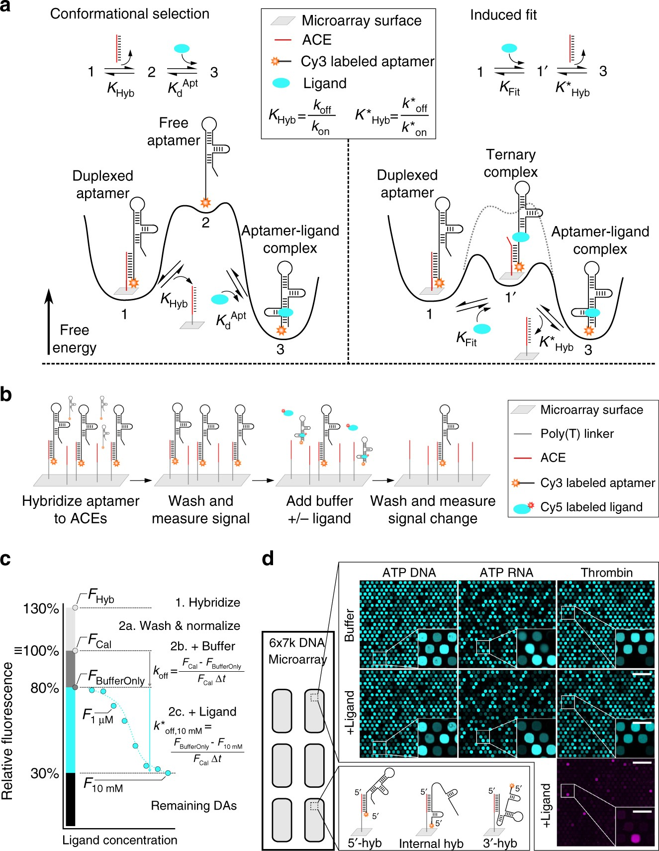 What Does Hyb Mean >> Comprehensive Profiling Of The Ligand Binding Landscapes Of Duplexed