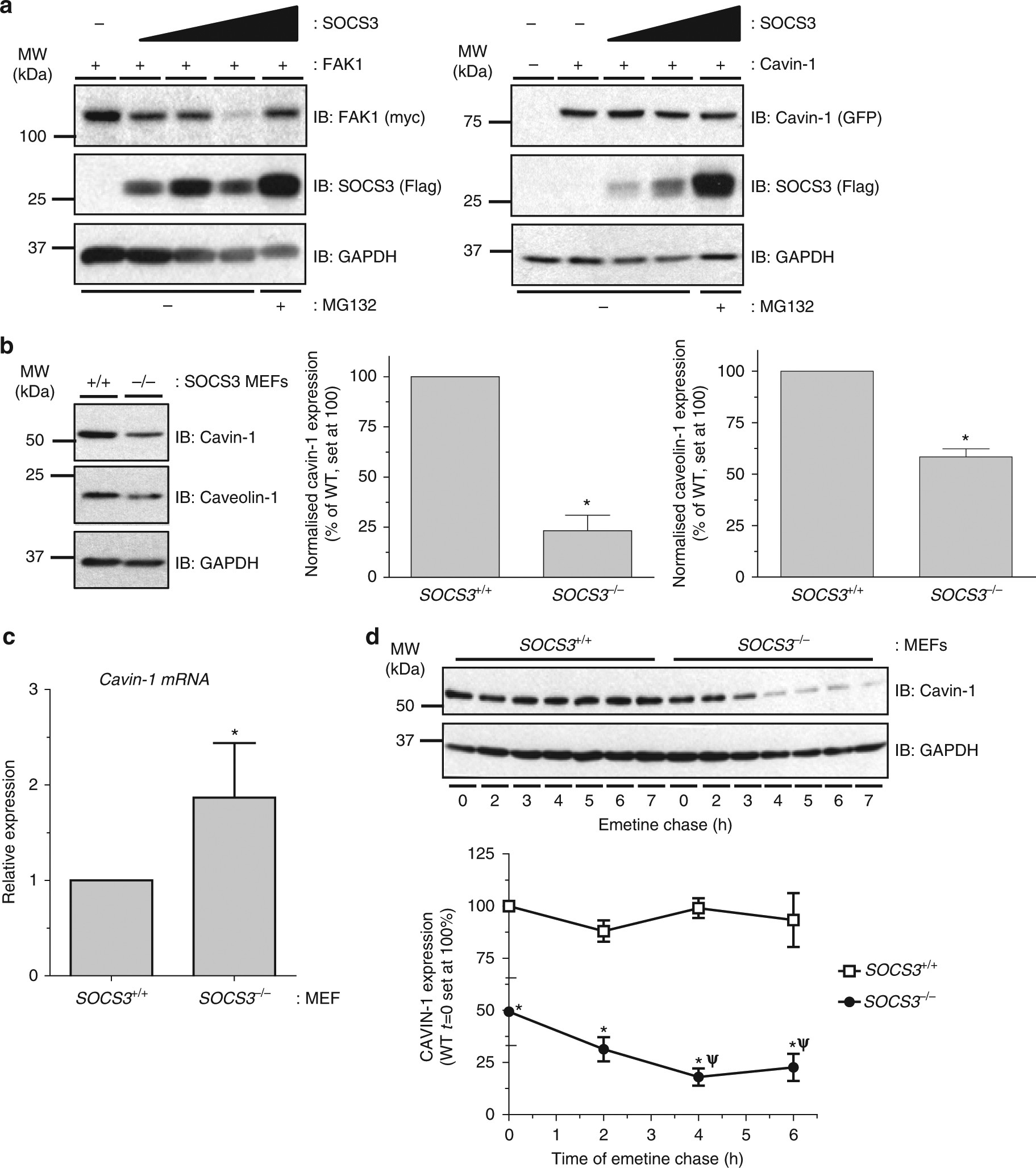 Interaction of suppressor of cytokine signalling 3 with cavin 1