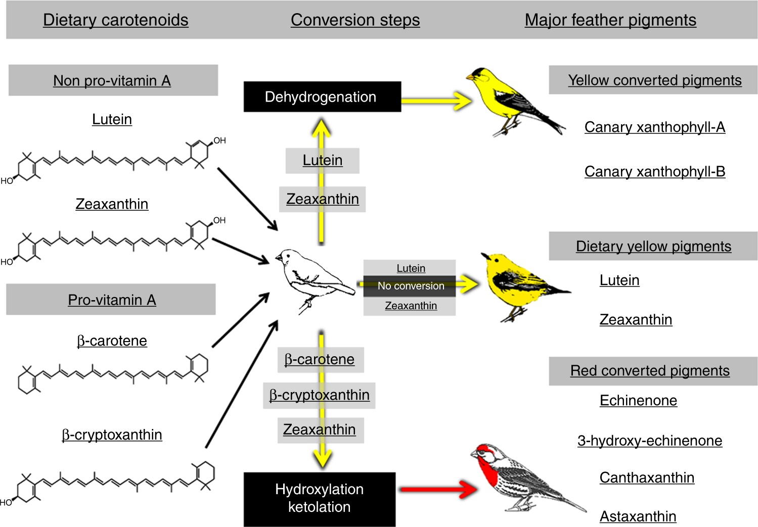 85dab4f8b Carotenoid metabolism strengthens the link between feather coloration and  individual quality | Nature Communications