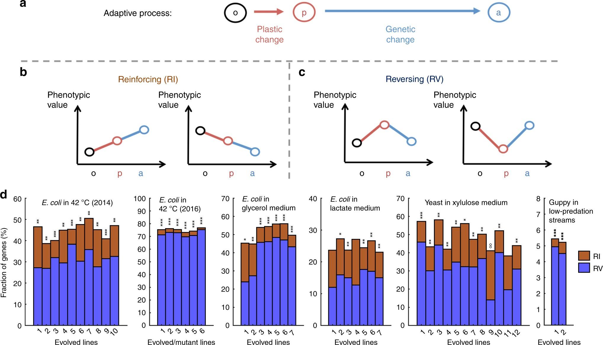 Evolutionary Adaptations To New Environments Generally Reverse