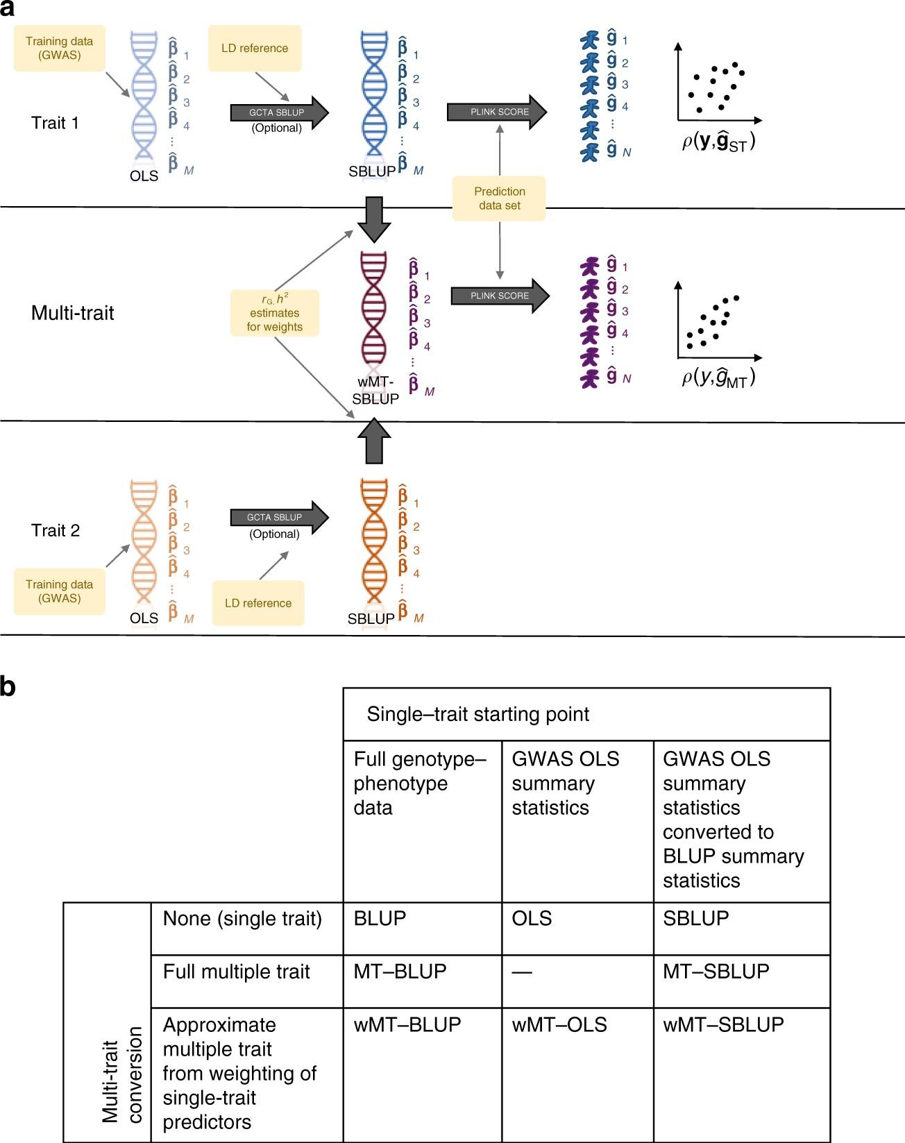 Improving genetic prediction by leveraging genetic
