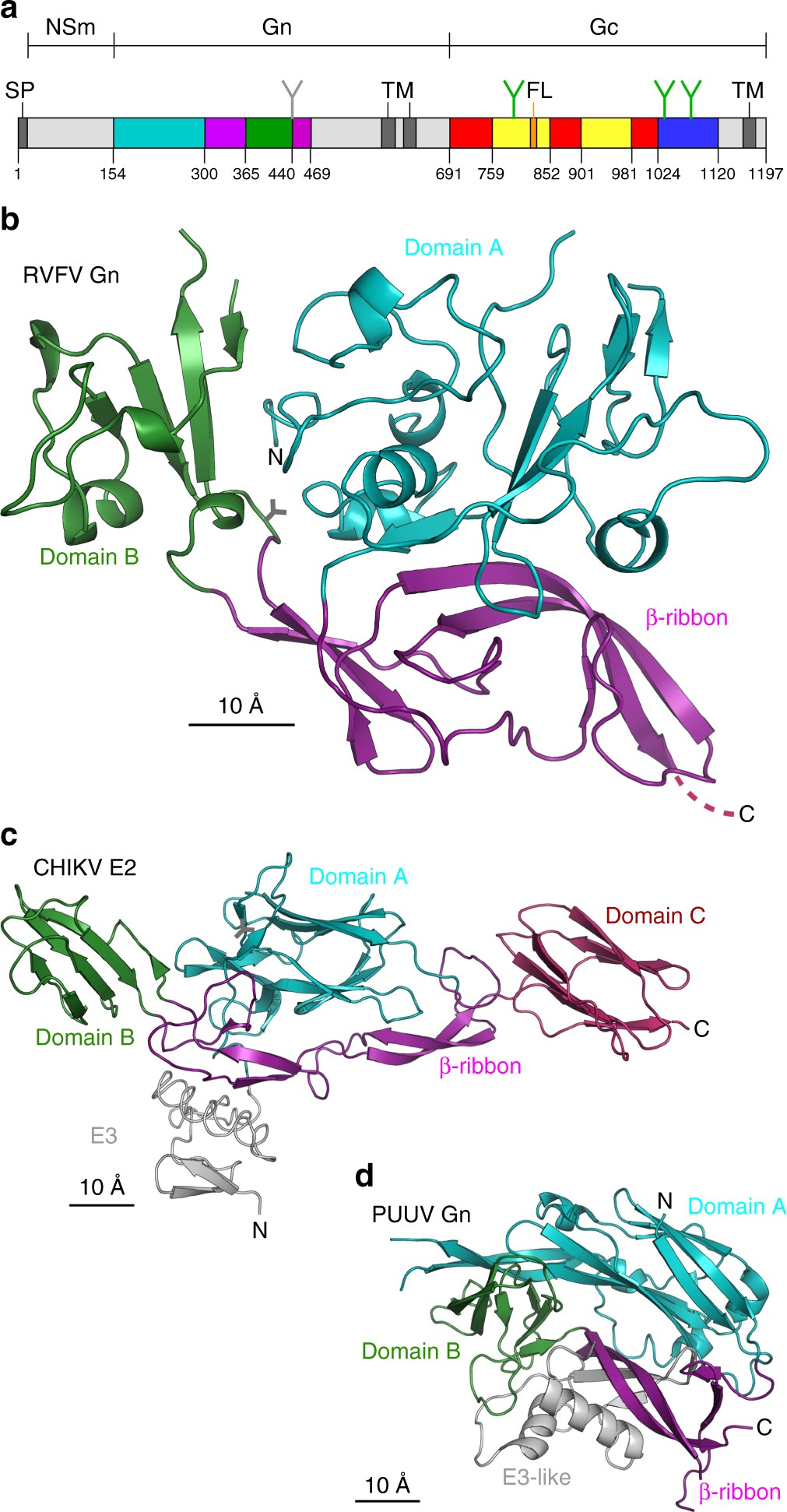 Shielding And Activation Of A Viral Membrane Fusion Protein Nature