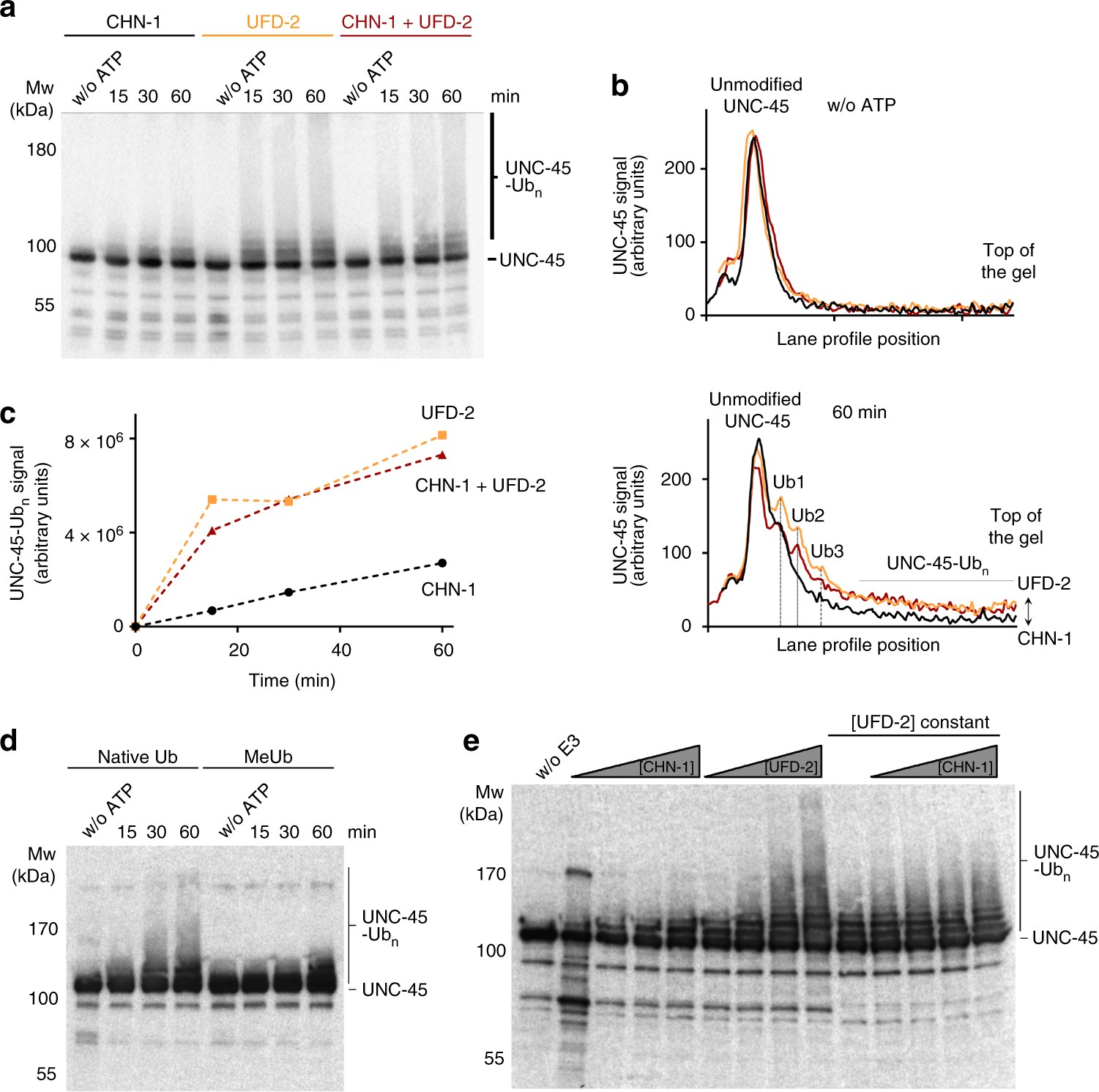 Ufd 2 Is An Adaptor Assisted E3 Ligase Targeting Unfolded Proteins Motor Additionally Bodine Electric Wiring Diagram Also Thermal Nature Communications