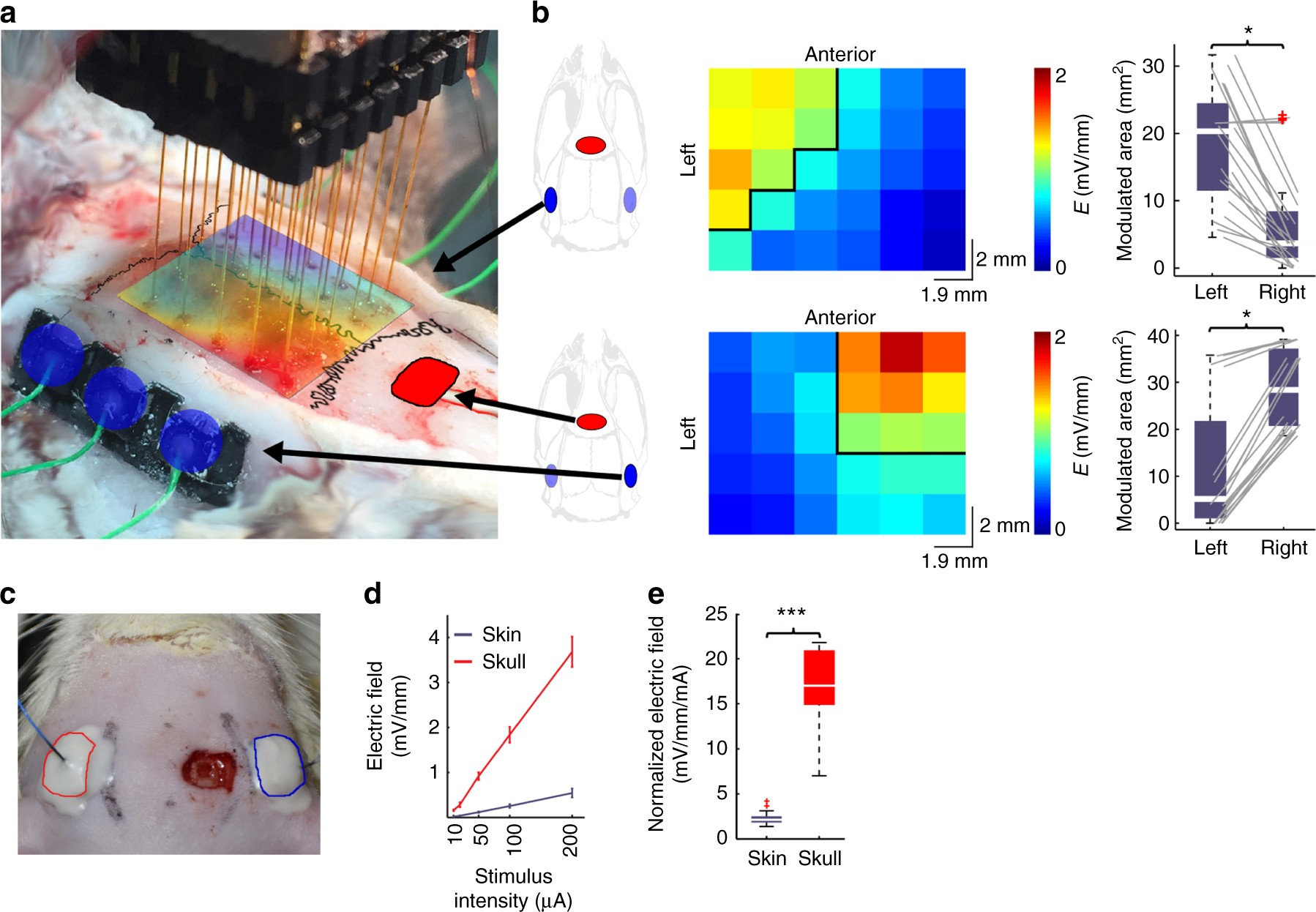 Direct Effects Of Transcranial Electric Stimulation On Brain At Pc Power Supply 1 Electronic Circuit By Levone Circuits In Rats And Humans Nature Communications