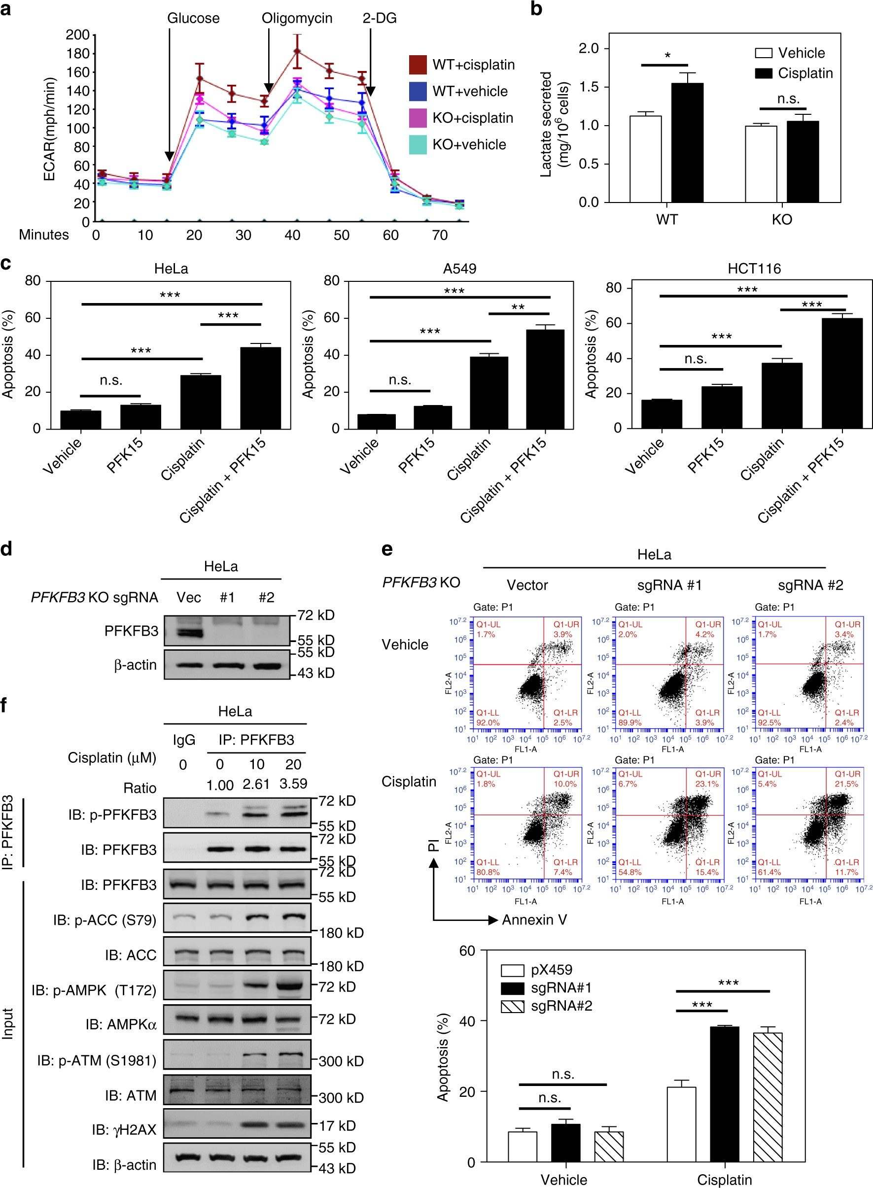 Acetylation accumulates PFKFB3 in cytoplasm to promote