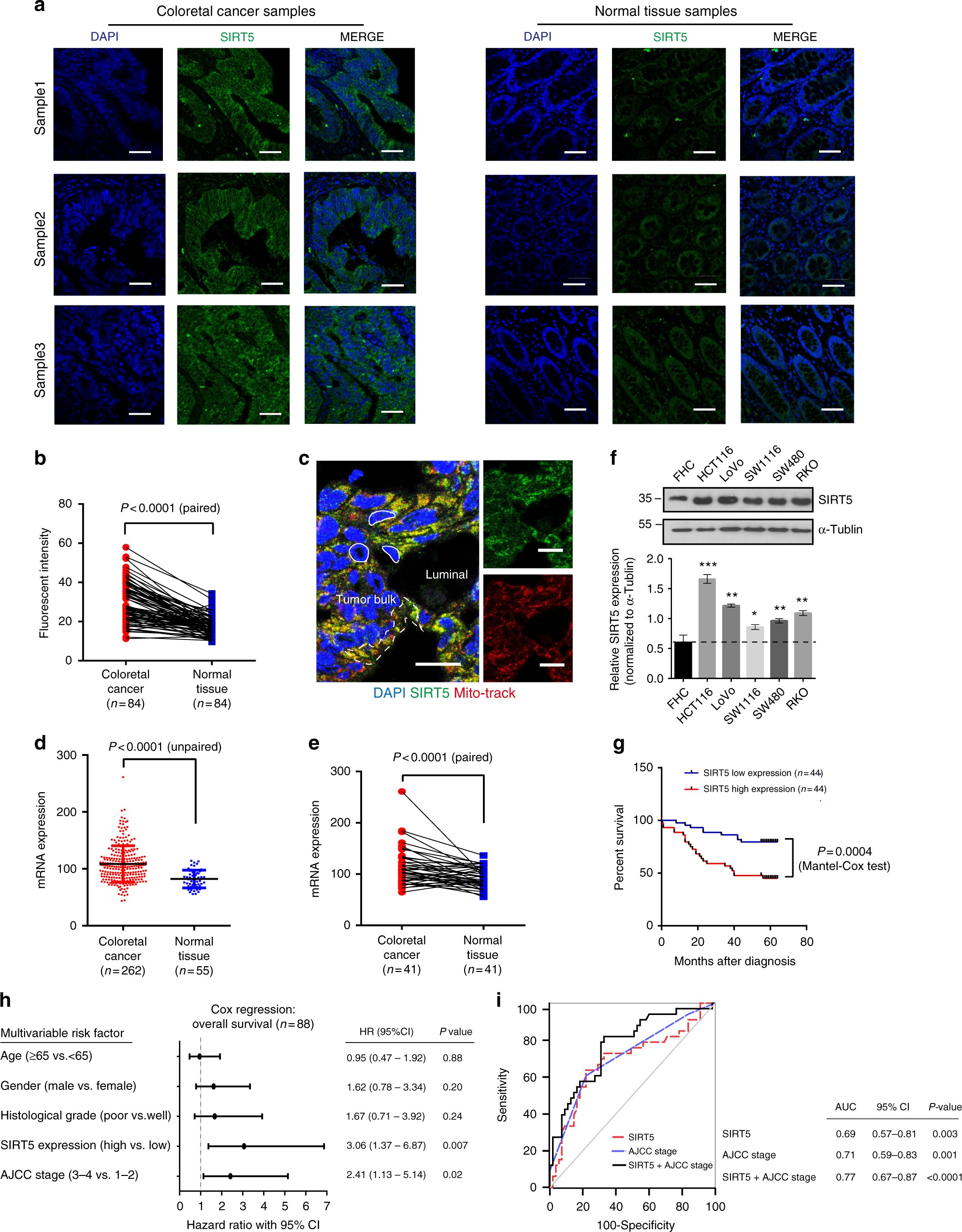Sirtuin5 Contributes To Colorectal Carcinogenesis By Enhancing Ntc Selection Criteria Steady State Current Glutaminolysis In A Deglutarylation Dependent Manner Nature Communications