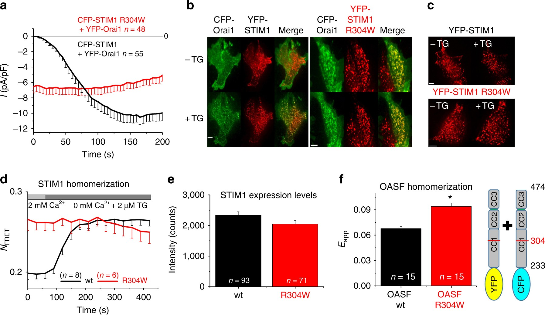 A Dual Mechanism Promotes Switching Of The Stormorken Stim1 R304w Capacitive Switches Sensory Mutant Into Activated State Nature Communications