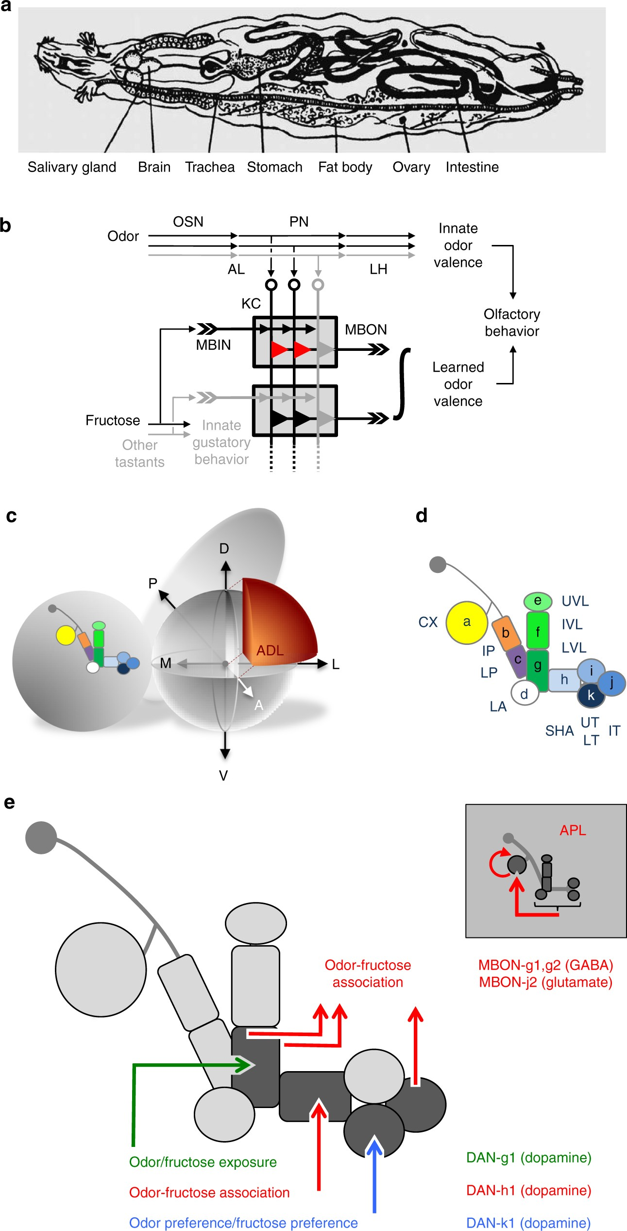 Functional Architecture Of Reward Learning In Mushroom Body Lightdark Switch With Relay Schematic Diagram Wiring Extrinsic Neurons Larval Drosophila Nature Communications