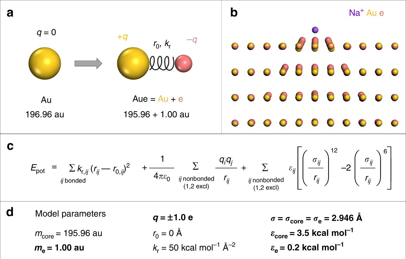 Insight Into Induced Charges At Metal Surfaces And Biointerfaces