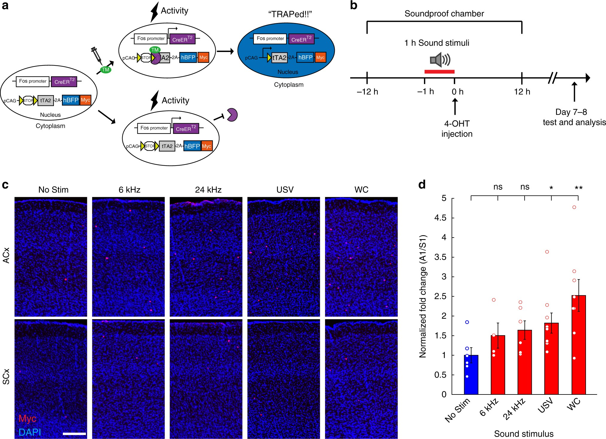 Genetic Tagging Of Active Neurons In Auditory Cortex Reveals Design A Laserdiode Driver For Range Finder Applications Ee Times Maternal Plasticity Coding Ultrasonic Vocalizations Nature Communications