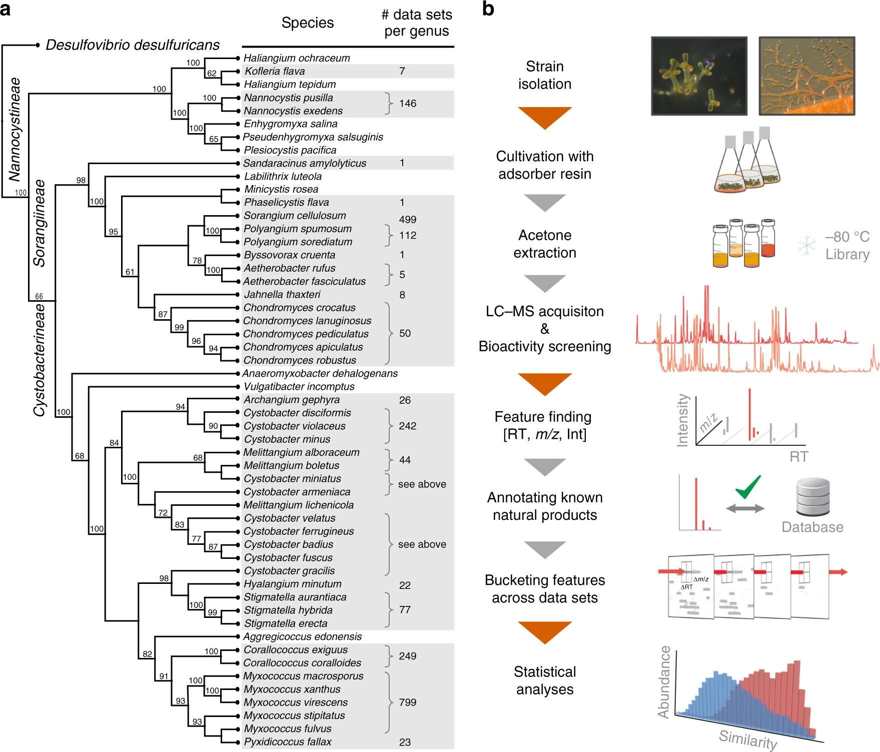 Correlating Chemical Diversity With Taxonomic Distance For Discovery How To Draw Up A Hierarchical Tree Diagram Of Natural Products In Myxobacteria Nature Communications