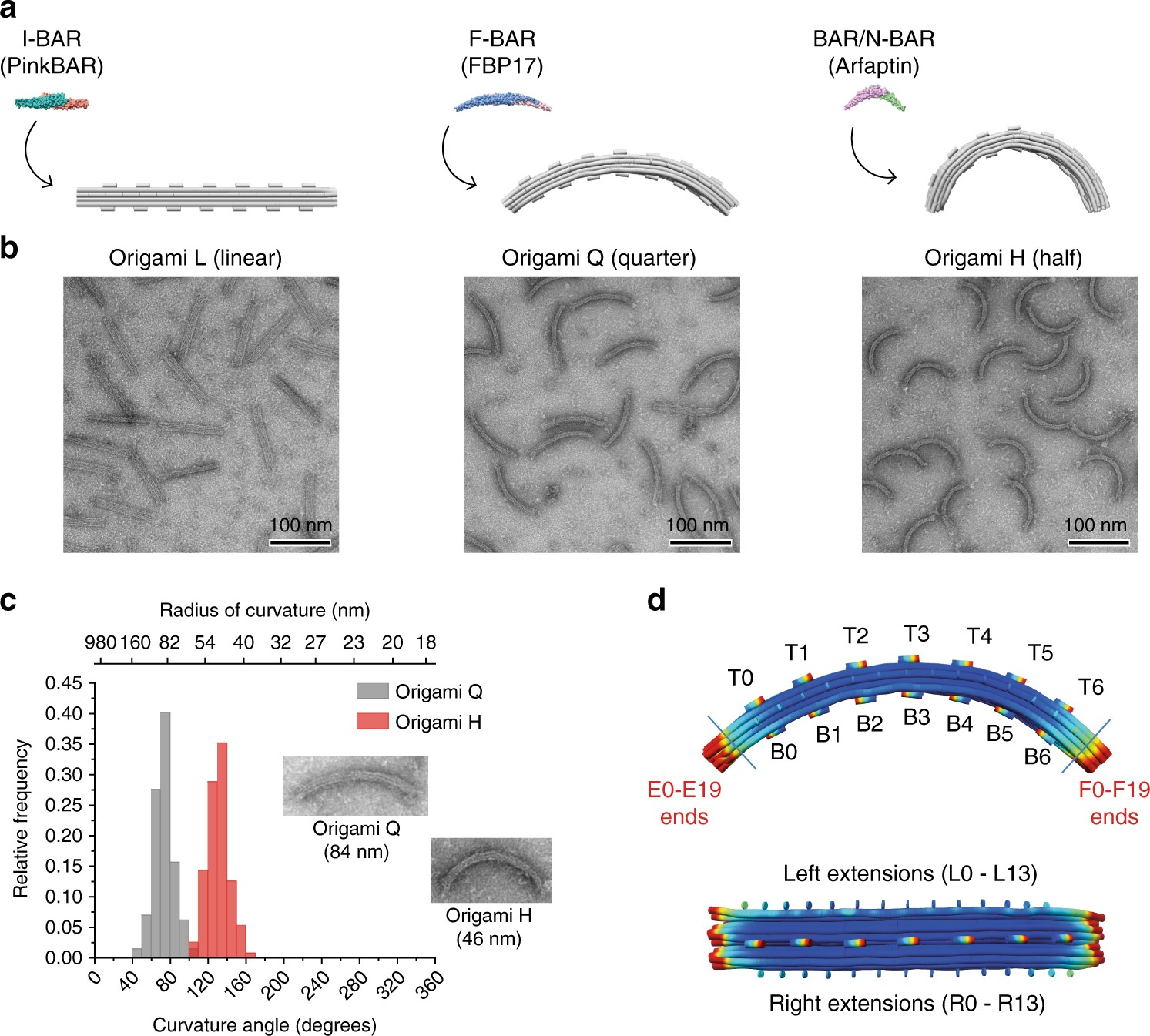 Membrane Sculpting By Curved Dna Origami Scaffolds Nature