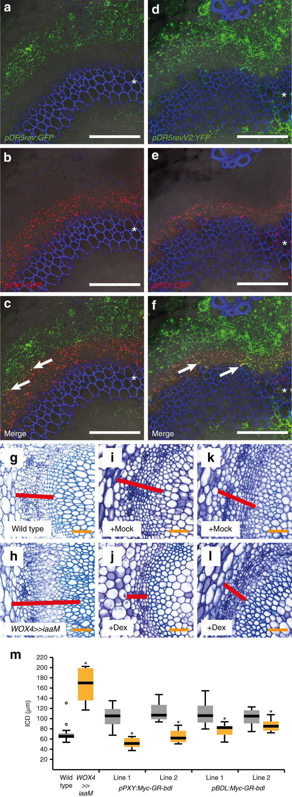 Spatial specificity of auxin responses coordinates wood formation ...
