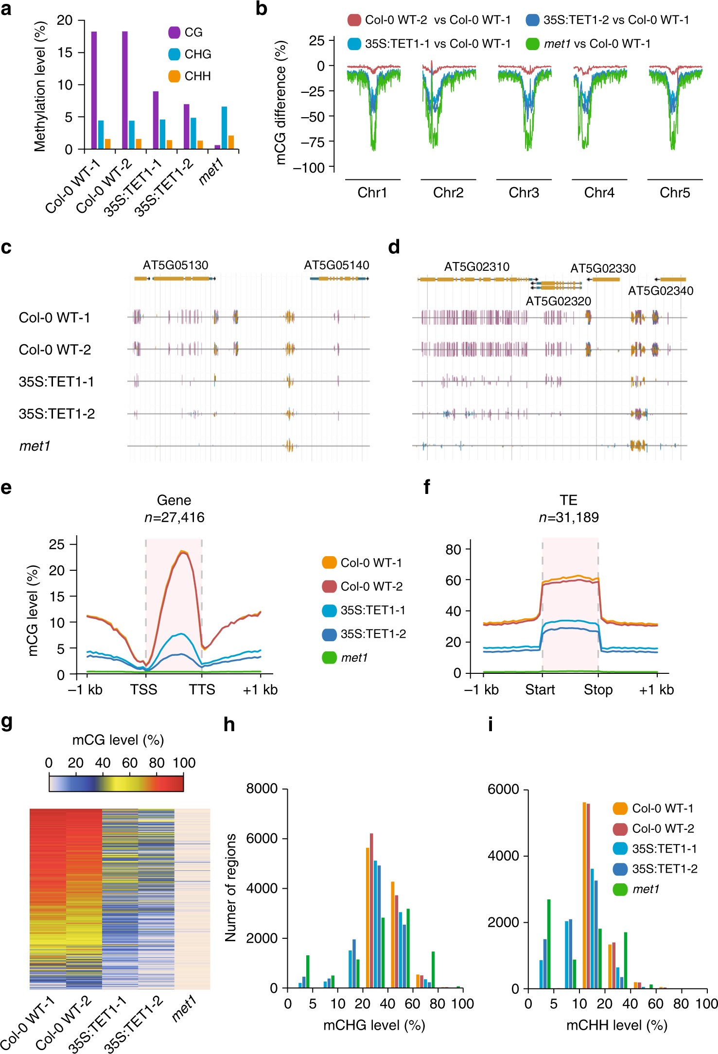 TET-mediated epimutagenesis of the Arabidopsis thaliana methylome