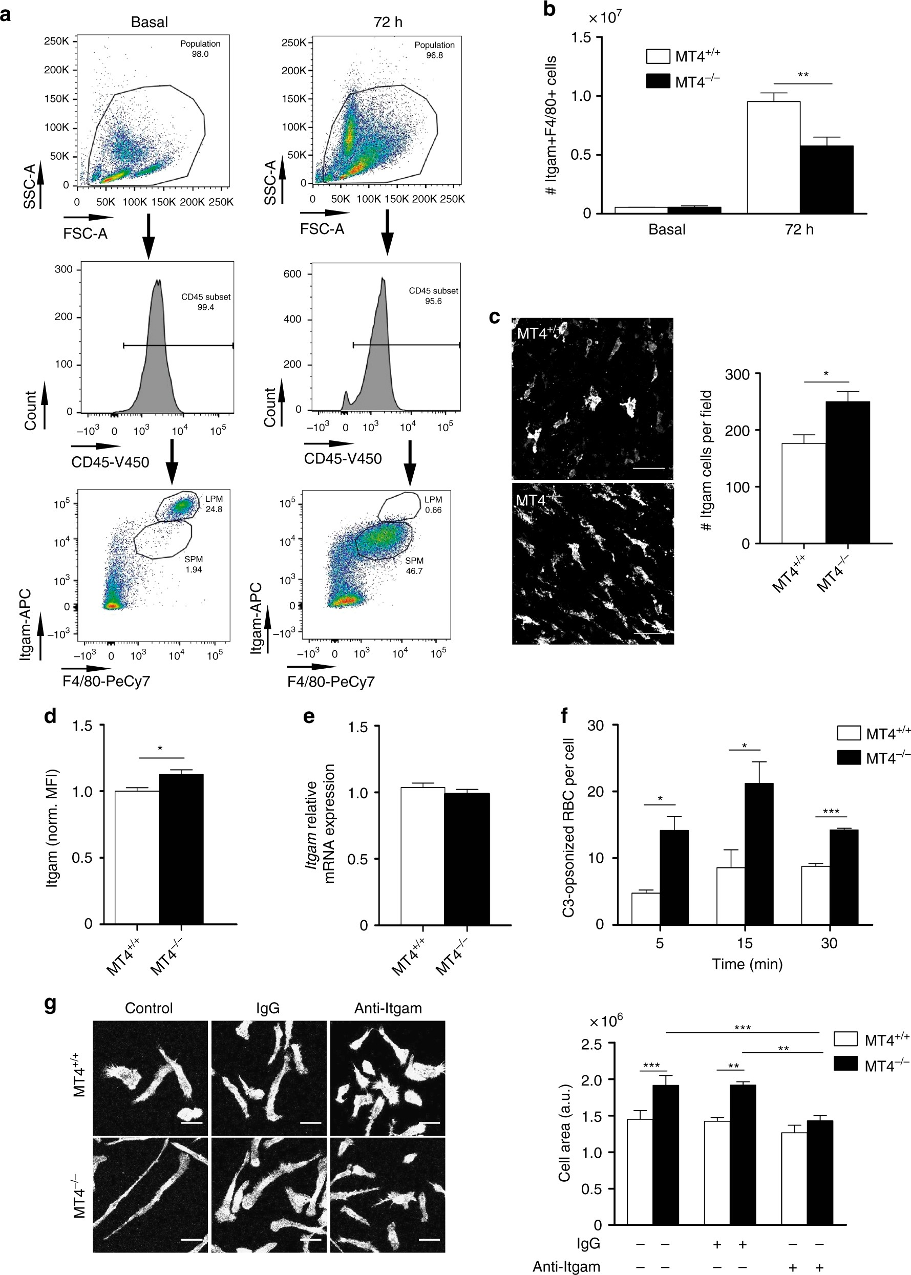 MT4-MMP deficiency increases patrolling monocyte recruitment to