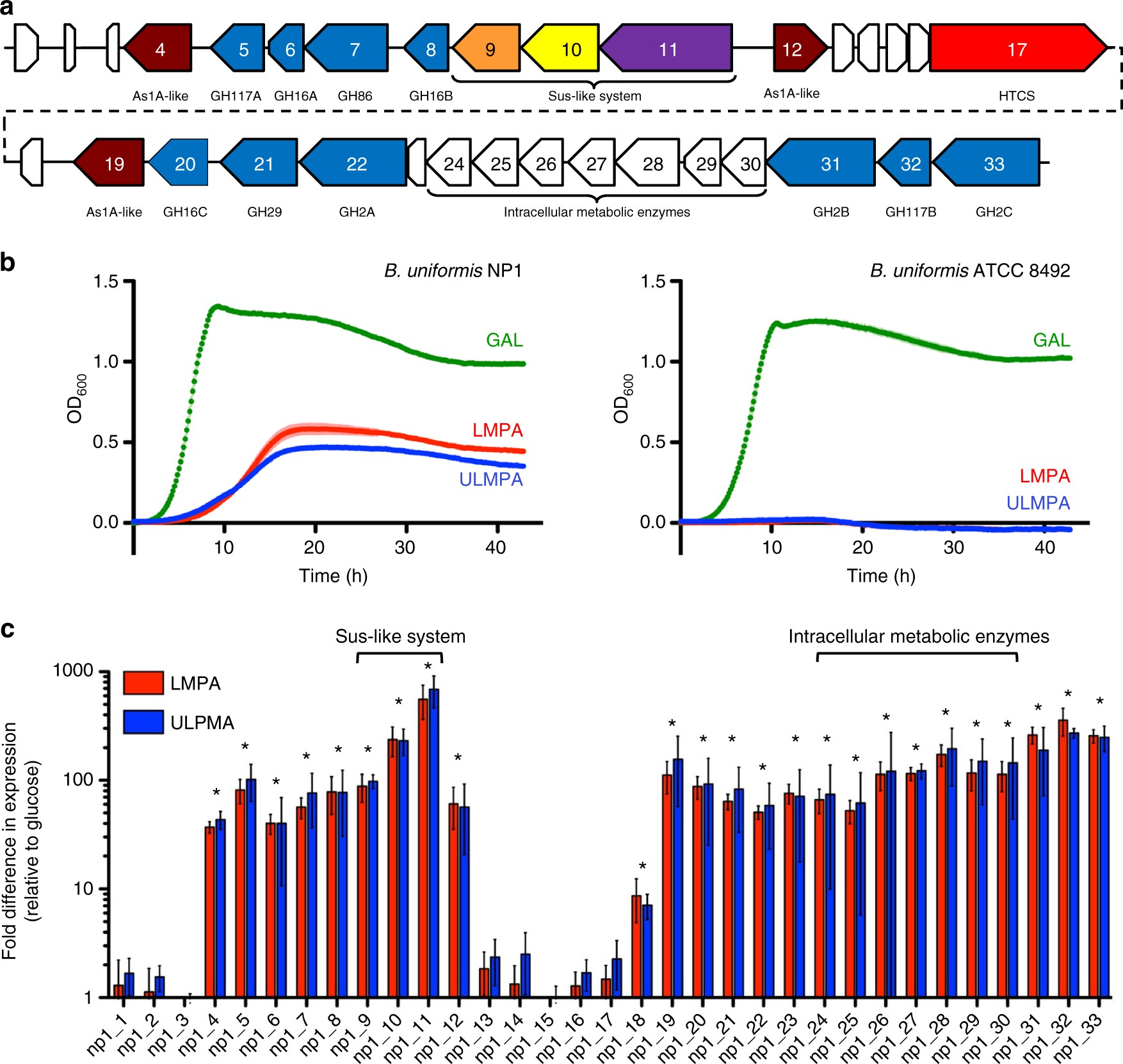 Molecular Basis Of An Agarose Metabolic Pathway Acquired By A Human