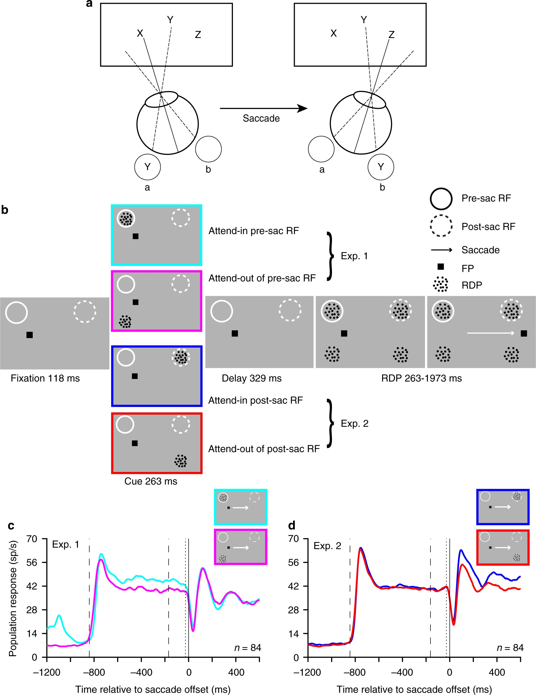 Saccade-synchronized rapid attention shifts in macaque visual ...
