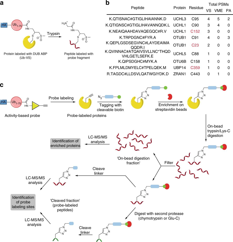 Reactive-site-centric chemoproteomics identifies a distinct ... on
