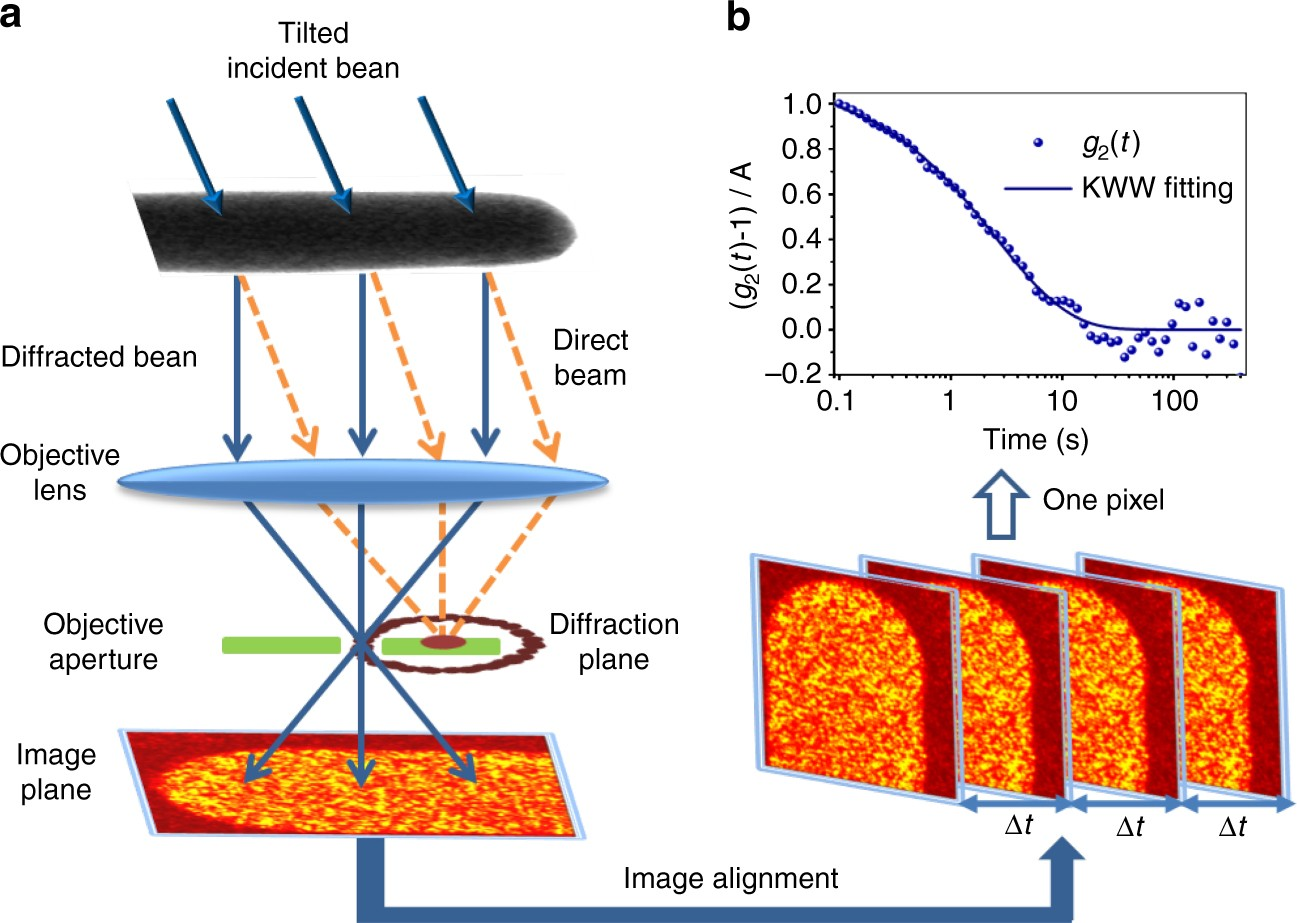 Spatially heterogeneous dynamics in a metallic glass forming liquid imaged  by electron correlation microscopy | Nature Communications