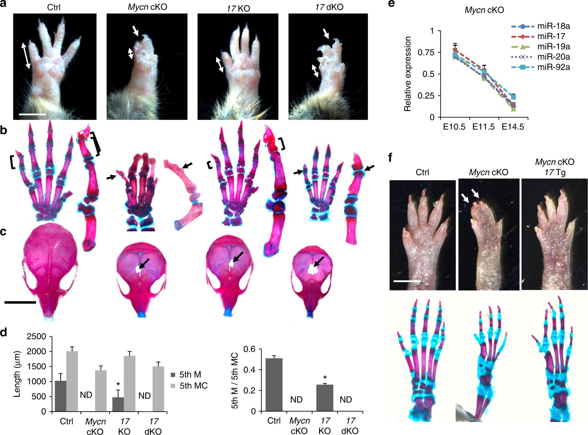 Distinct molecular pathways mediate Mycn and Myc-regulated miR-17-92