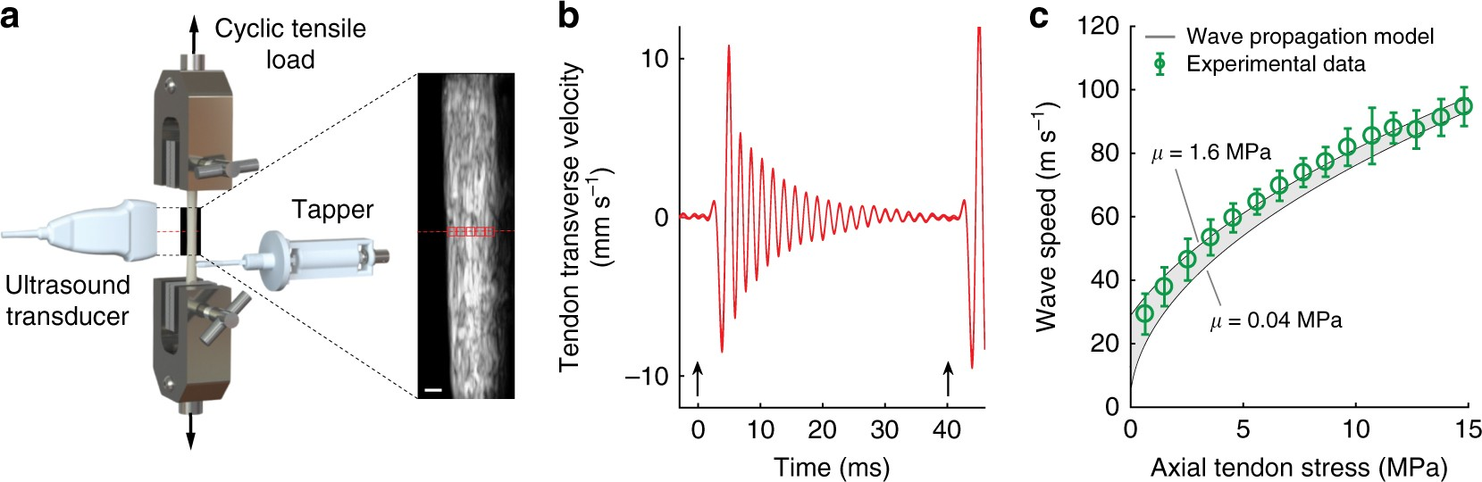 Gauging Force By Tapping Tendons Nature Communications