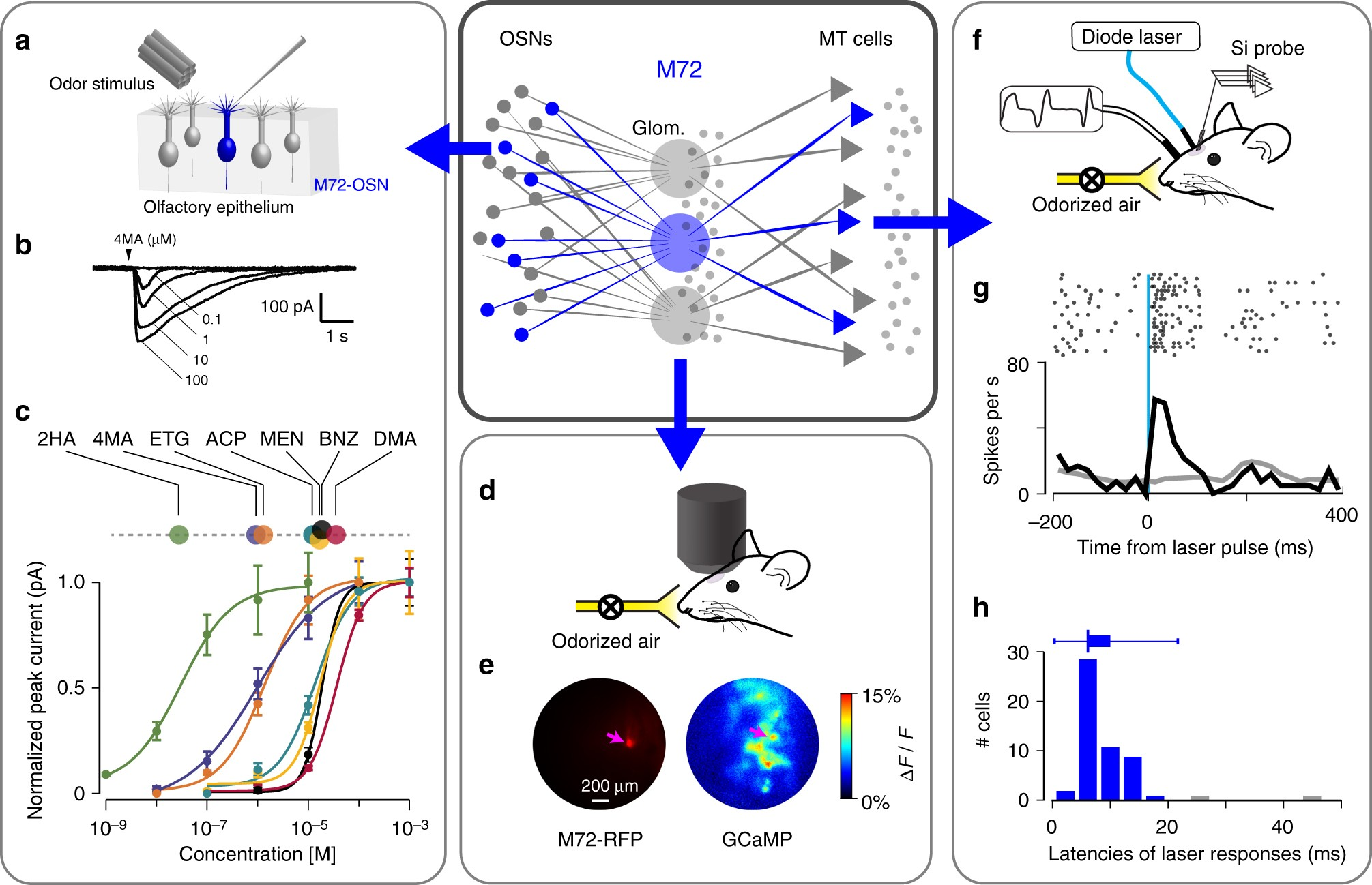 Stimulus Dependent Diversity And Stereotypy In The Output Of An Drawing Pid Electrical Single Line Electronic Block Diagram Olfactory Functional Unit Nature Communications