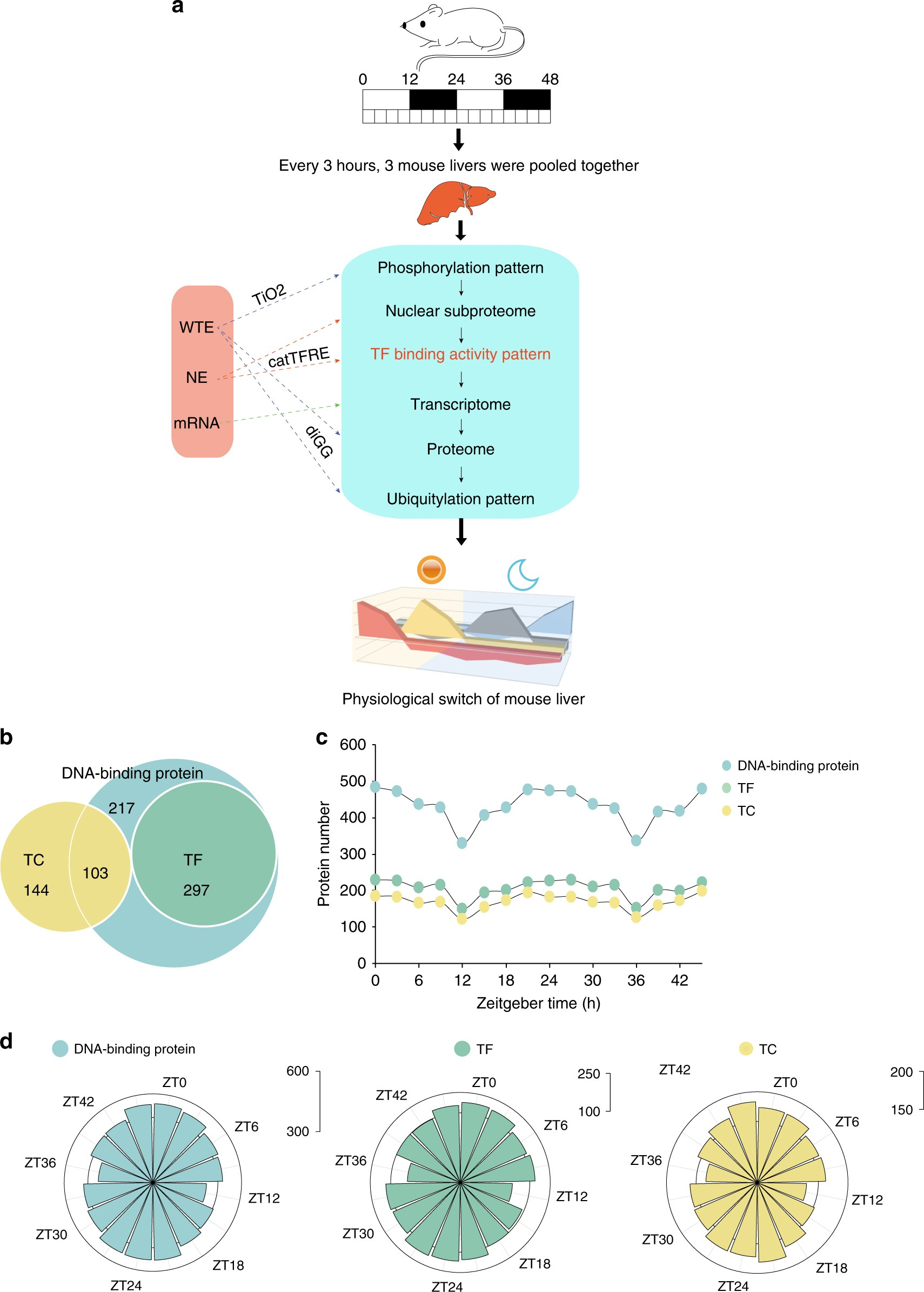 A proteomics landscape of circadian clock in mouse liver