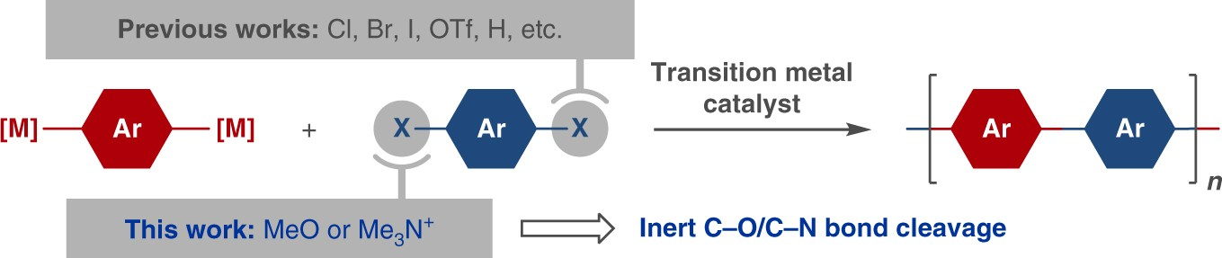 Cross-coupling polycondensation via C–O or C–N bond cleavage ...