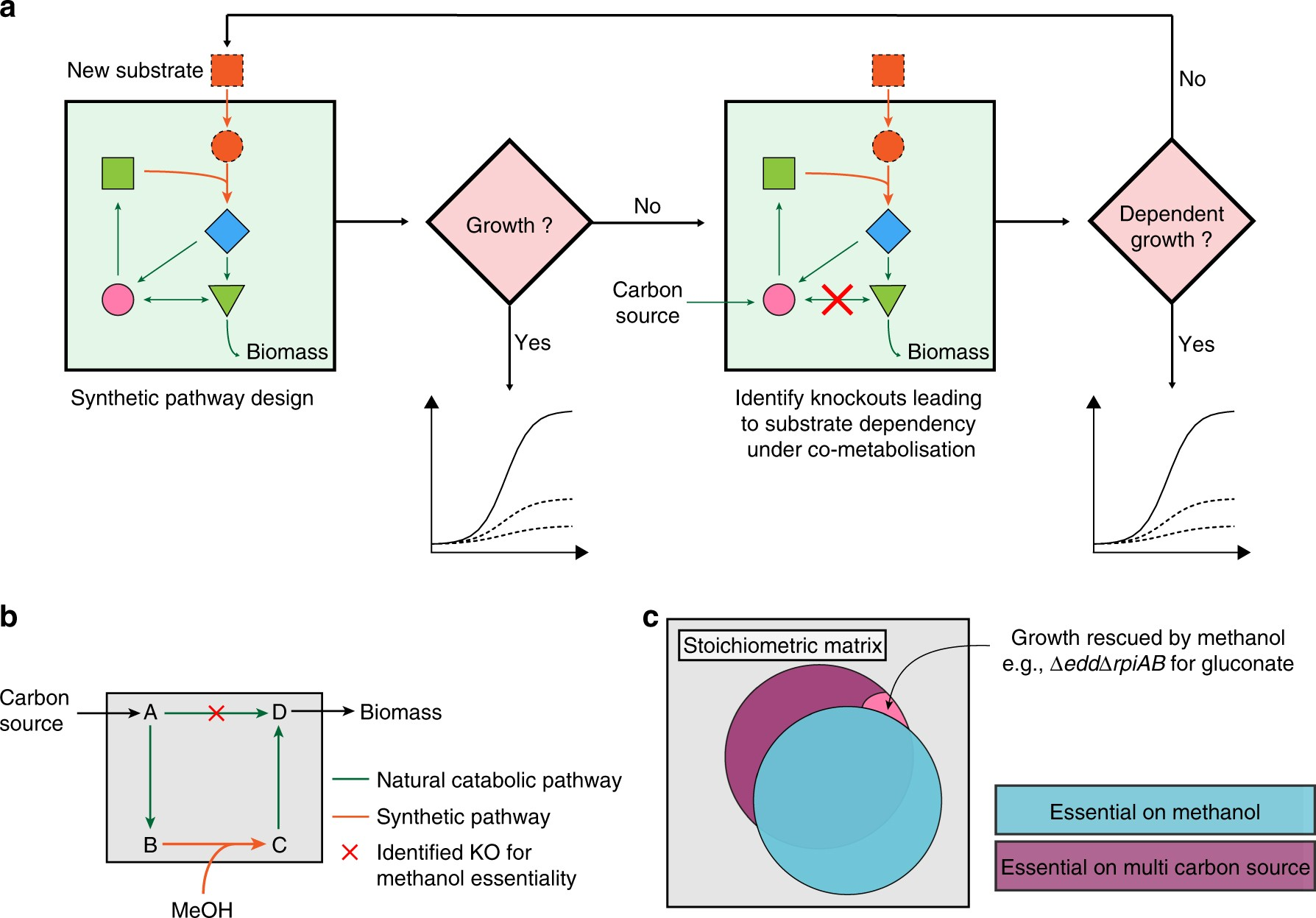 Methanol-essential growth of Escherichia coli | Nature Communications