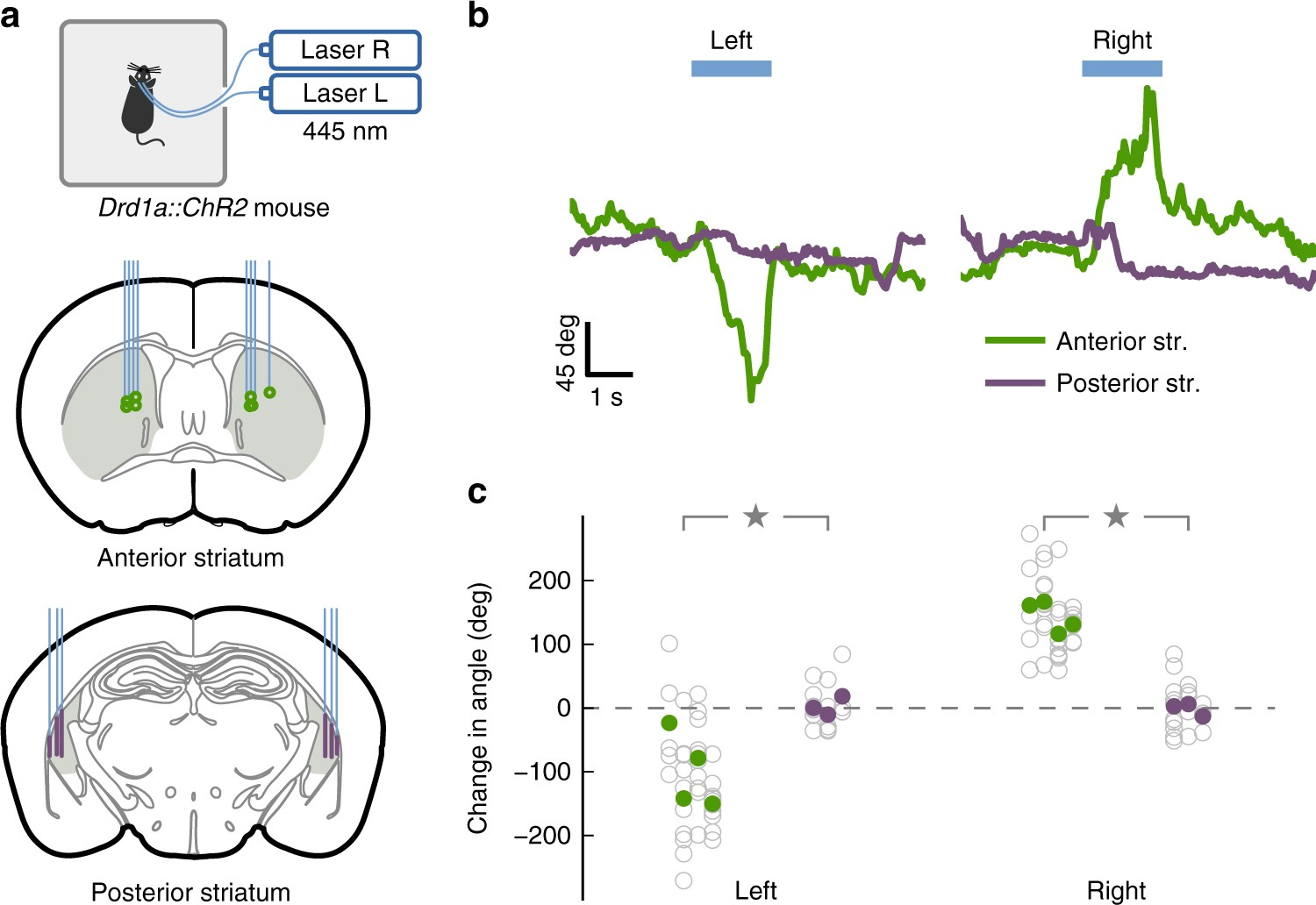 Stable Representation Of Sounds In The Posterior Striatum During I Want Aural Modulator Circuits Available All Over World Flexible Auditory Decisions Nature Communications