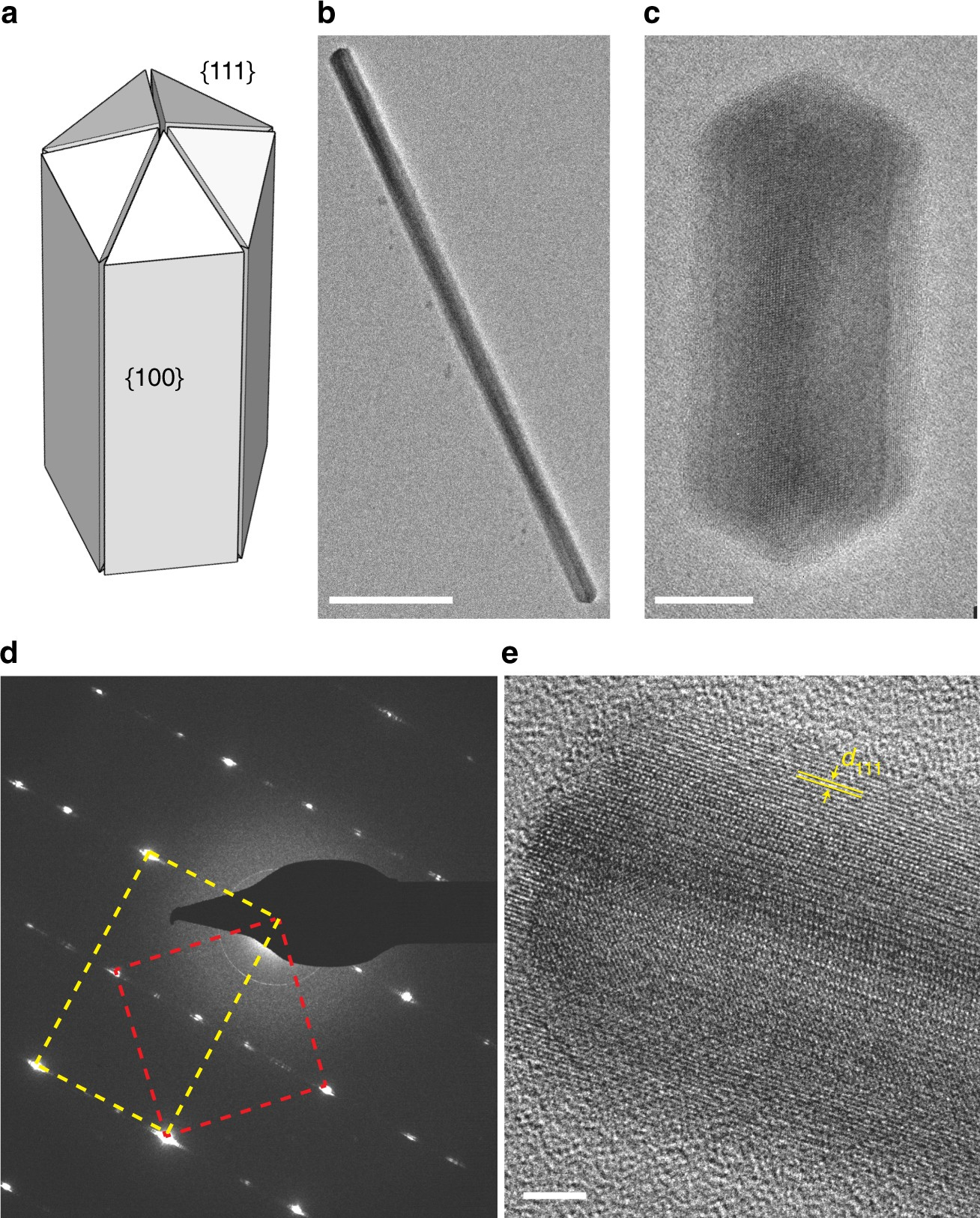 In situ visualization of solute driven phase coexistence within