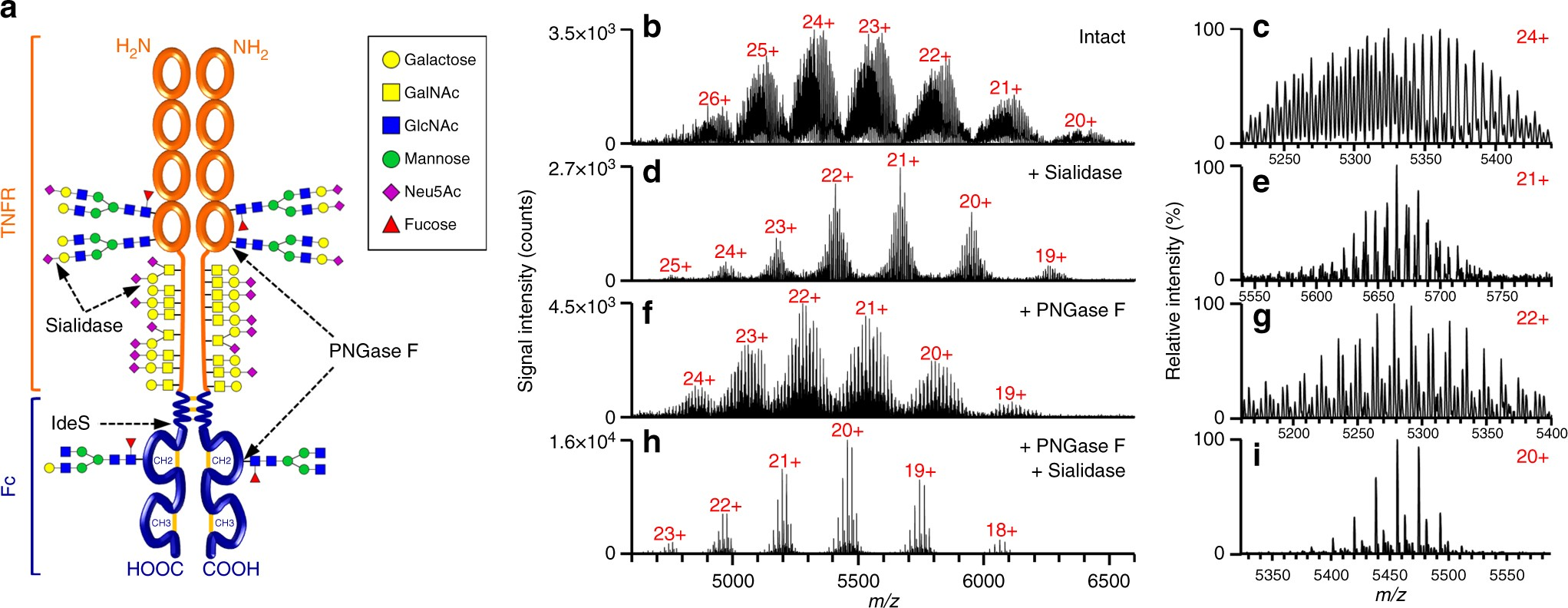Native mass spectrometry combined with enzymatic dissection