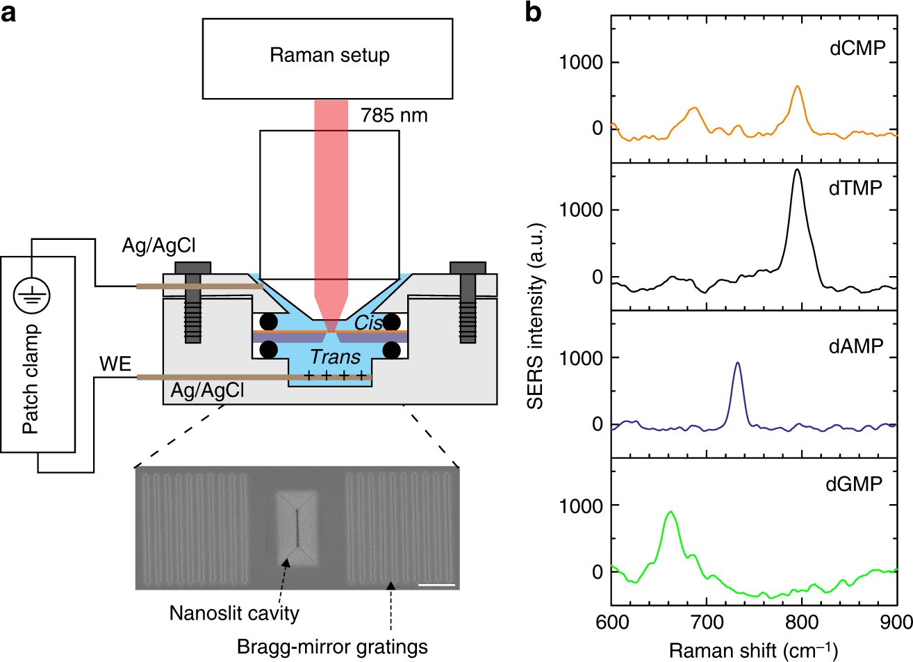 High Spatial Resolution Nanoslit Sers For Single Molecule Nucleobase Decade Counter Circuit Diagram Free Download Wiring Diagrams Sensing Nature Communications