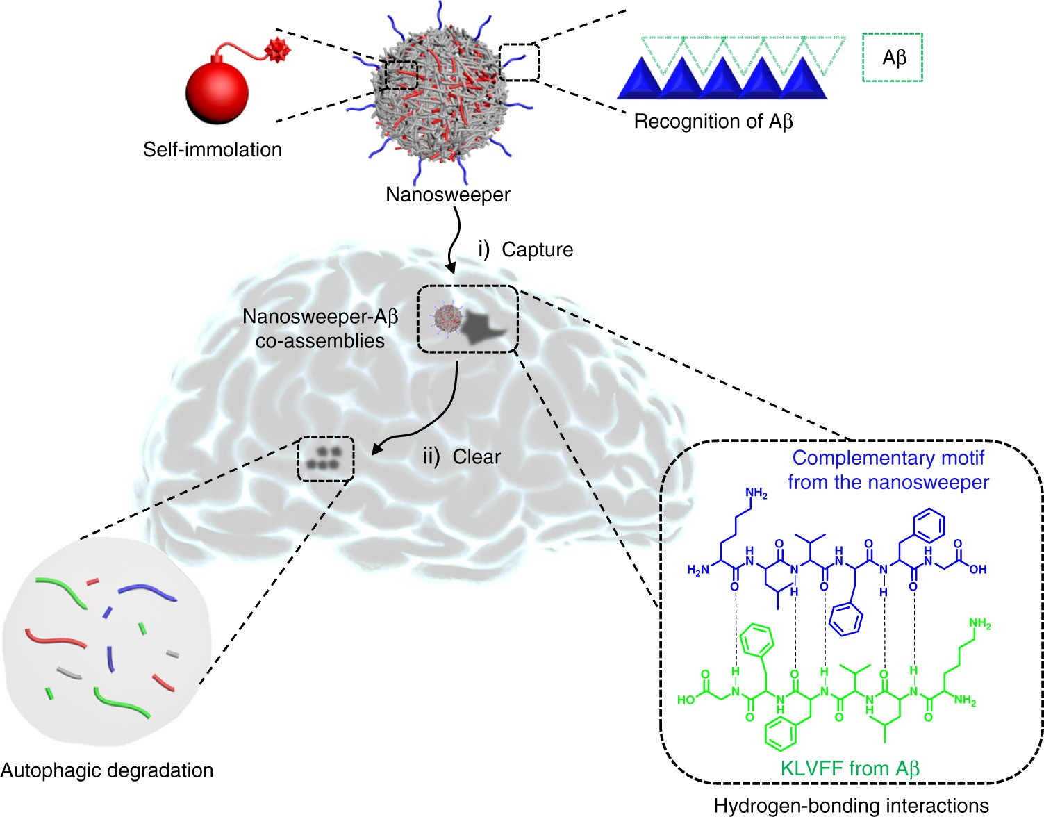 A Self Destructive Nanosweeper That Captures And Clears Amyloid β