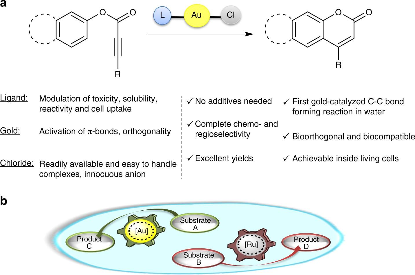 Concurrent And Orthogonal GoldI RutheniumII Catalysis Inside Living Cells