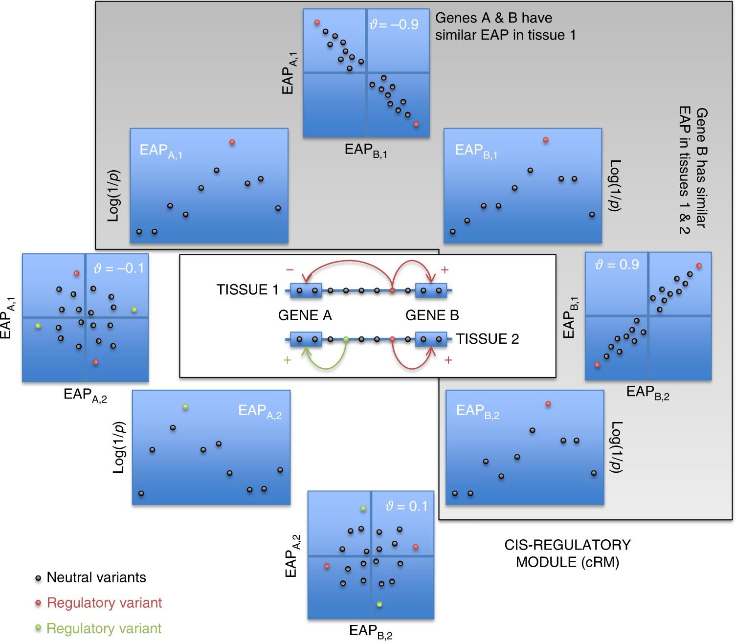 IBD risk loci are enriched in multigenic regulatory modules