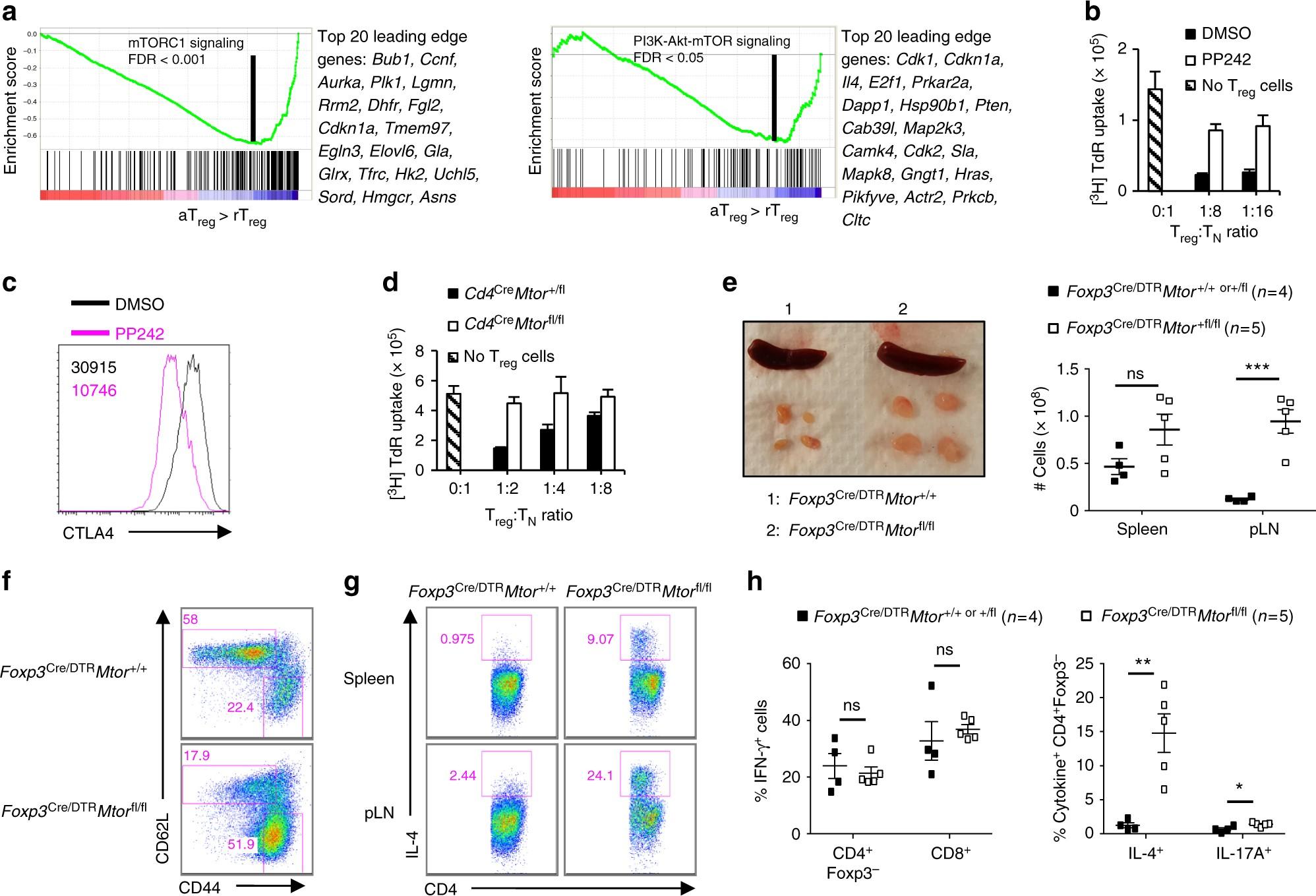 mTOR coordinates transcriptional programs and mitochondrial