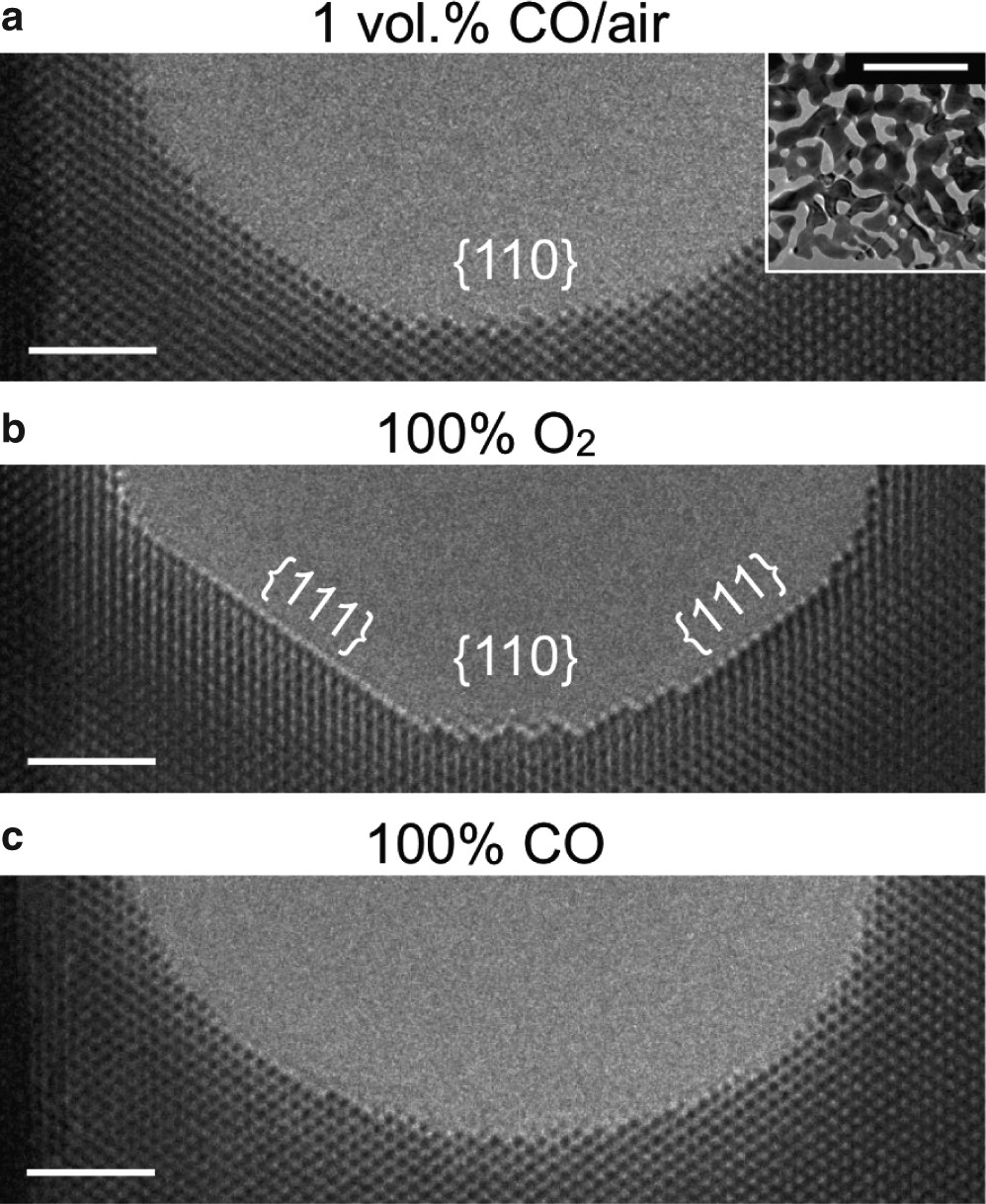 f45bd508b1e Self-activated surface dynamics in gold catalysts under reaction  environments