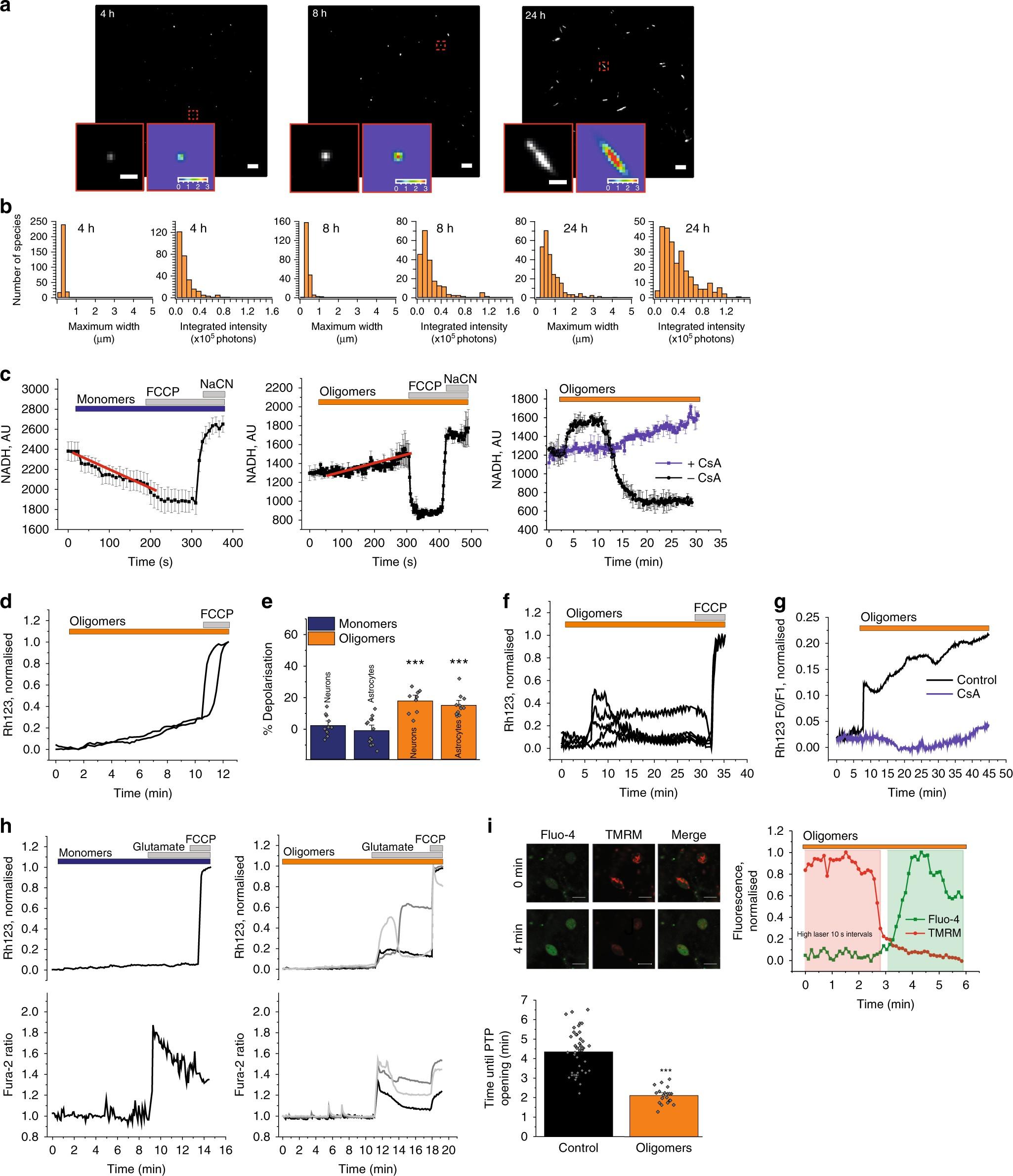 α-synuclein oligomers interact with ATP synthase and open the permeability  transition pore in Parkinson's disease | Nature Communications