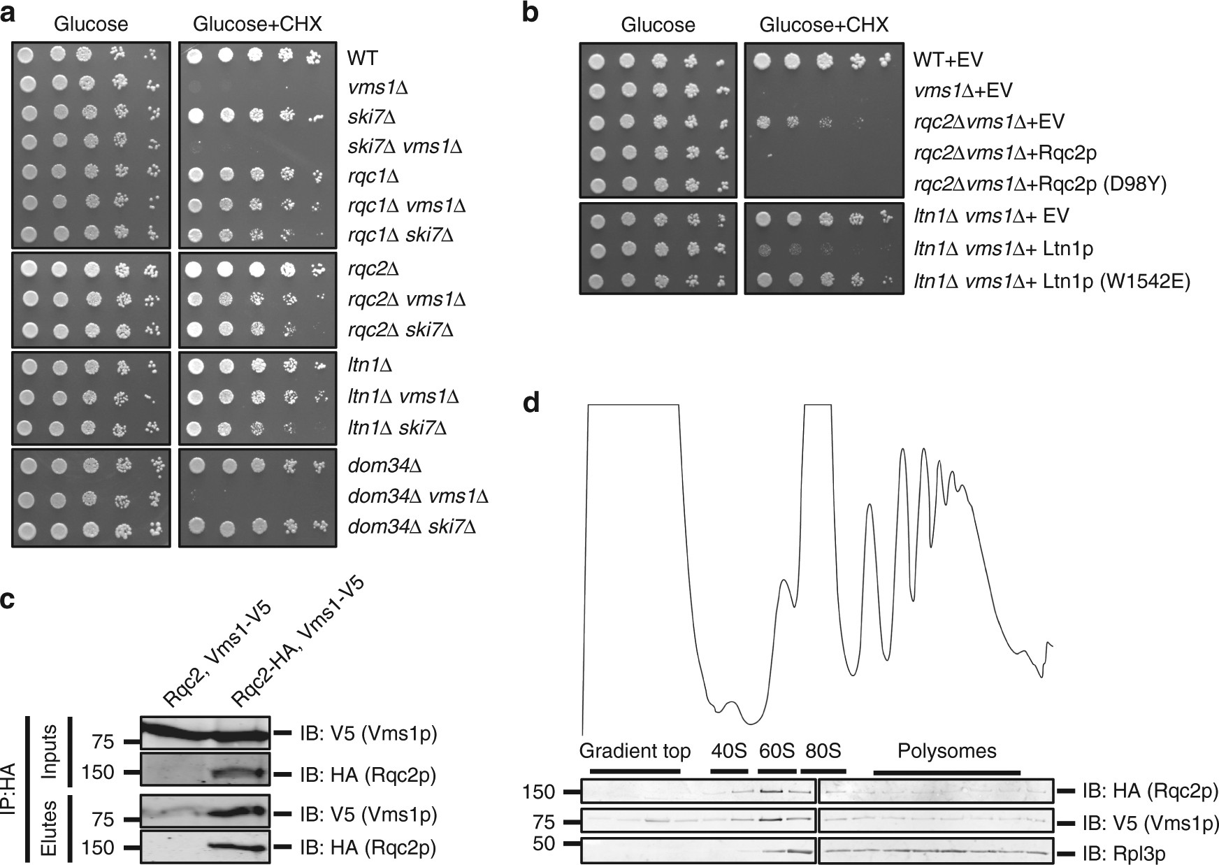 Vms1p Is A Release Factor For The Ribosome Associated Quality