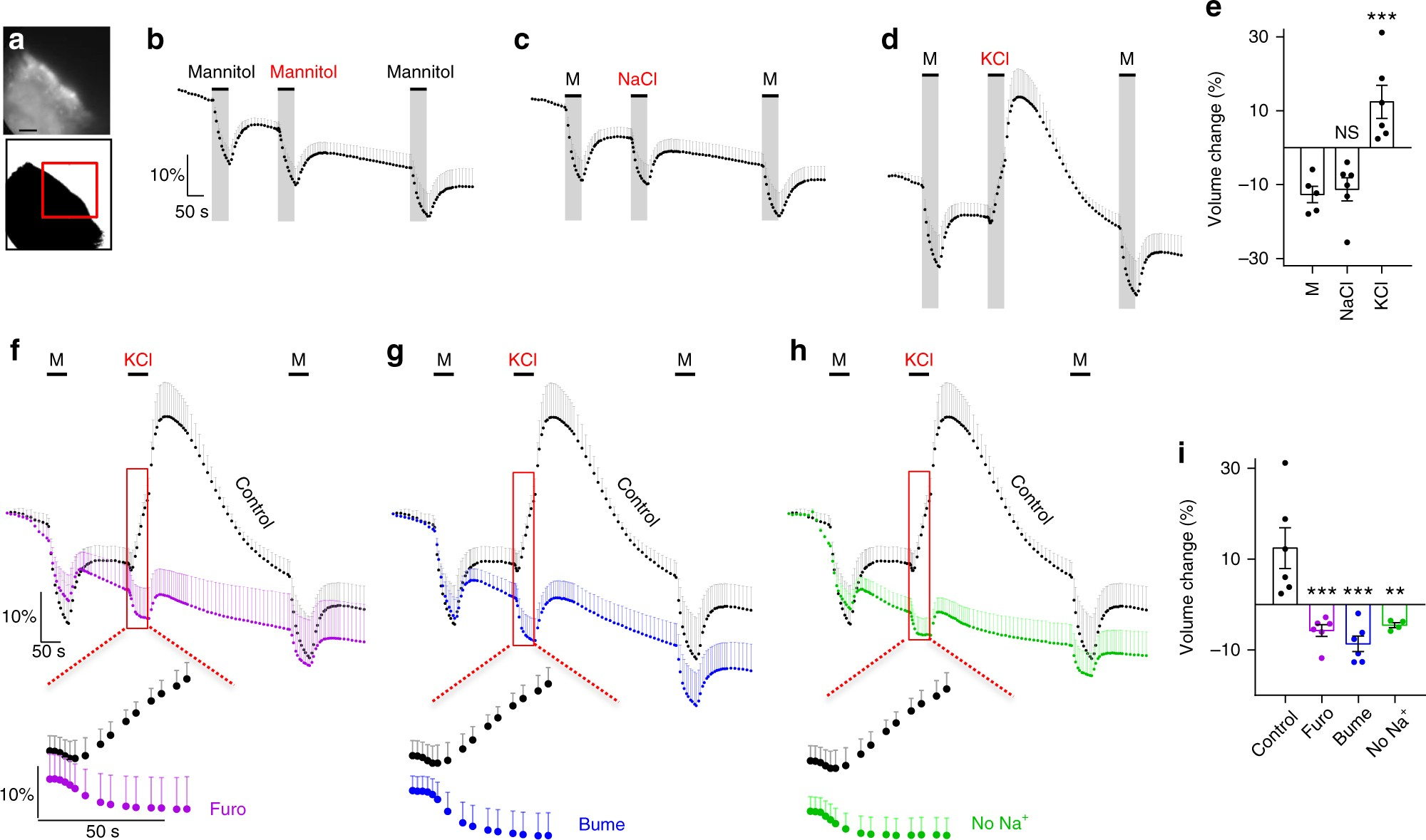 Cotransporter Mediated Water Transport Underlying Cerebrospinal Worthington C Wiring Diagram Fluid Formation Nature Communications