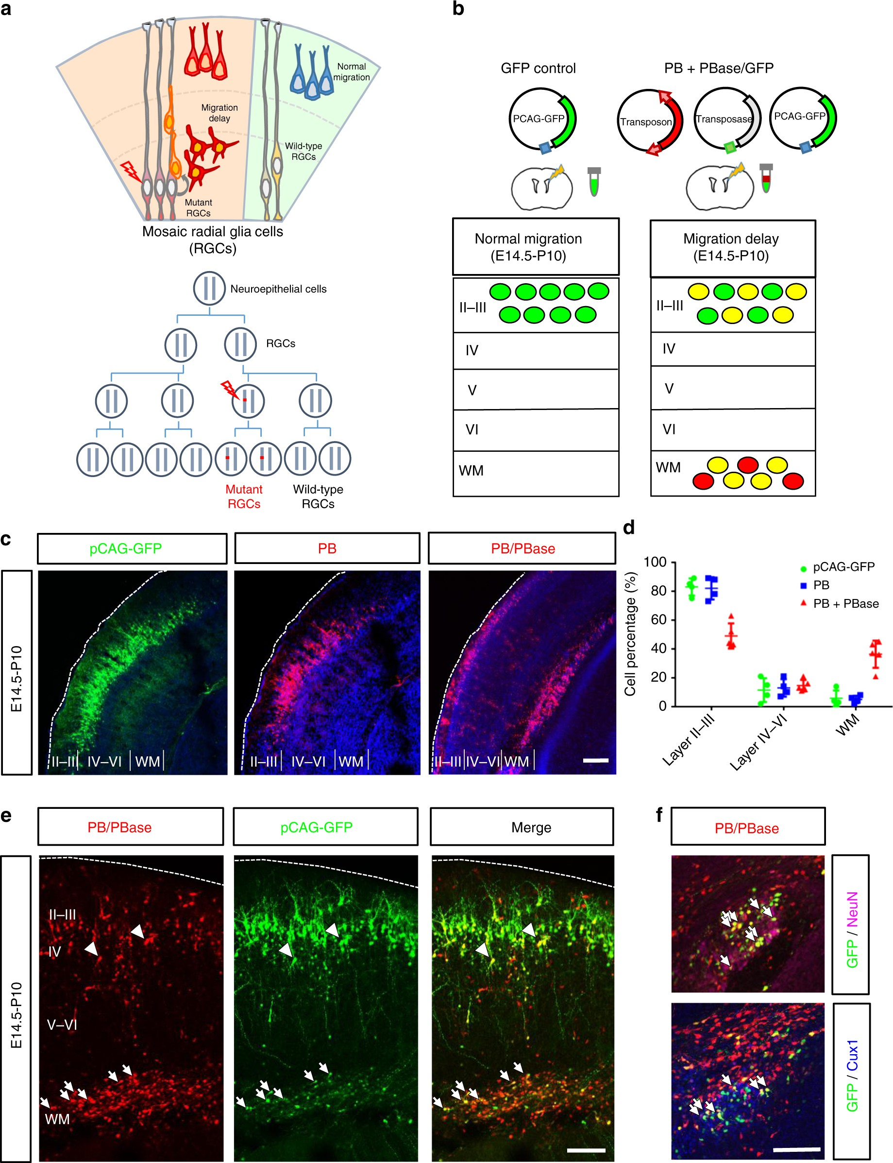Identification of genes associated with cortical malformation using