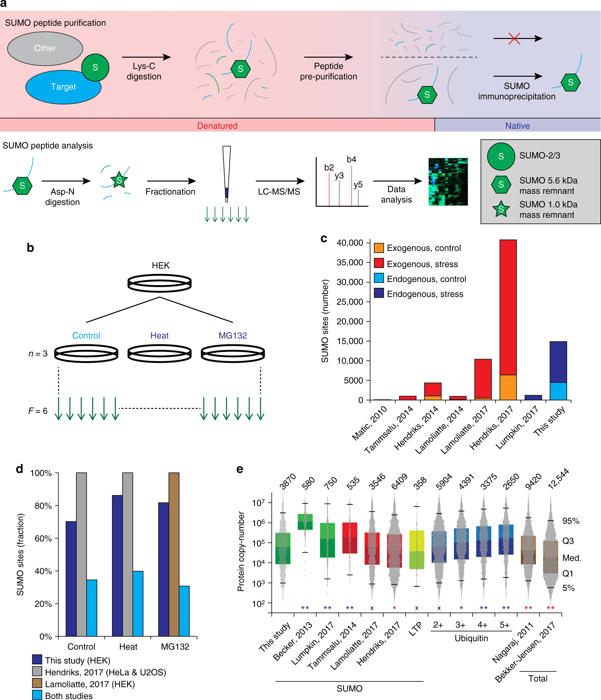 Site-specific characterization of endogenous SUMOylation